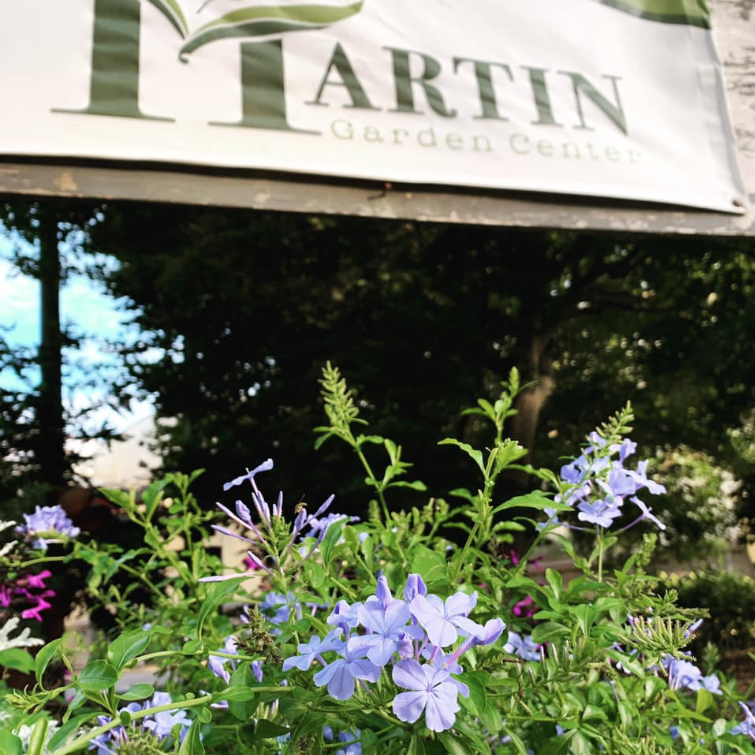 7. Martin Garden Center (Greenville, South Carolina)