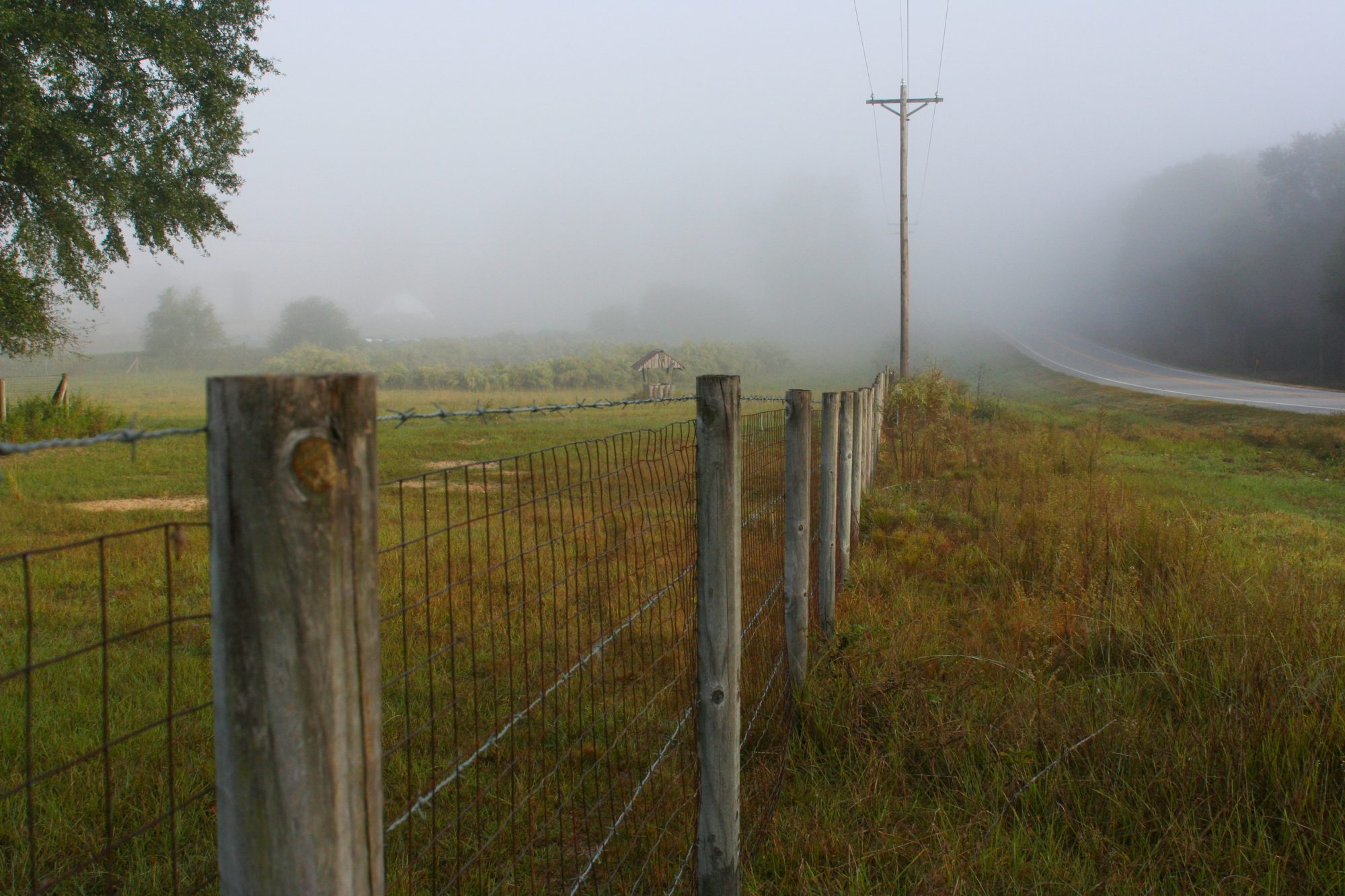 Foggy Road Side and Fence