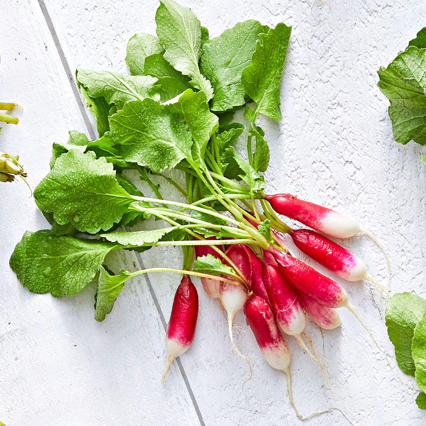French Breakfast Radish Variety