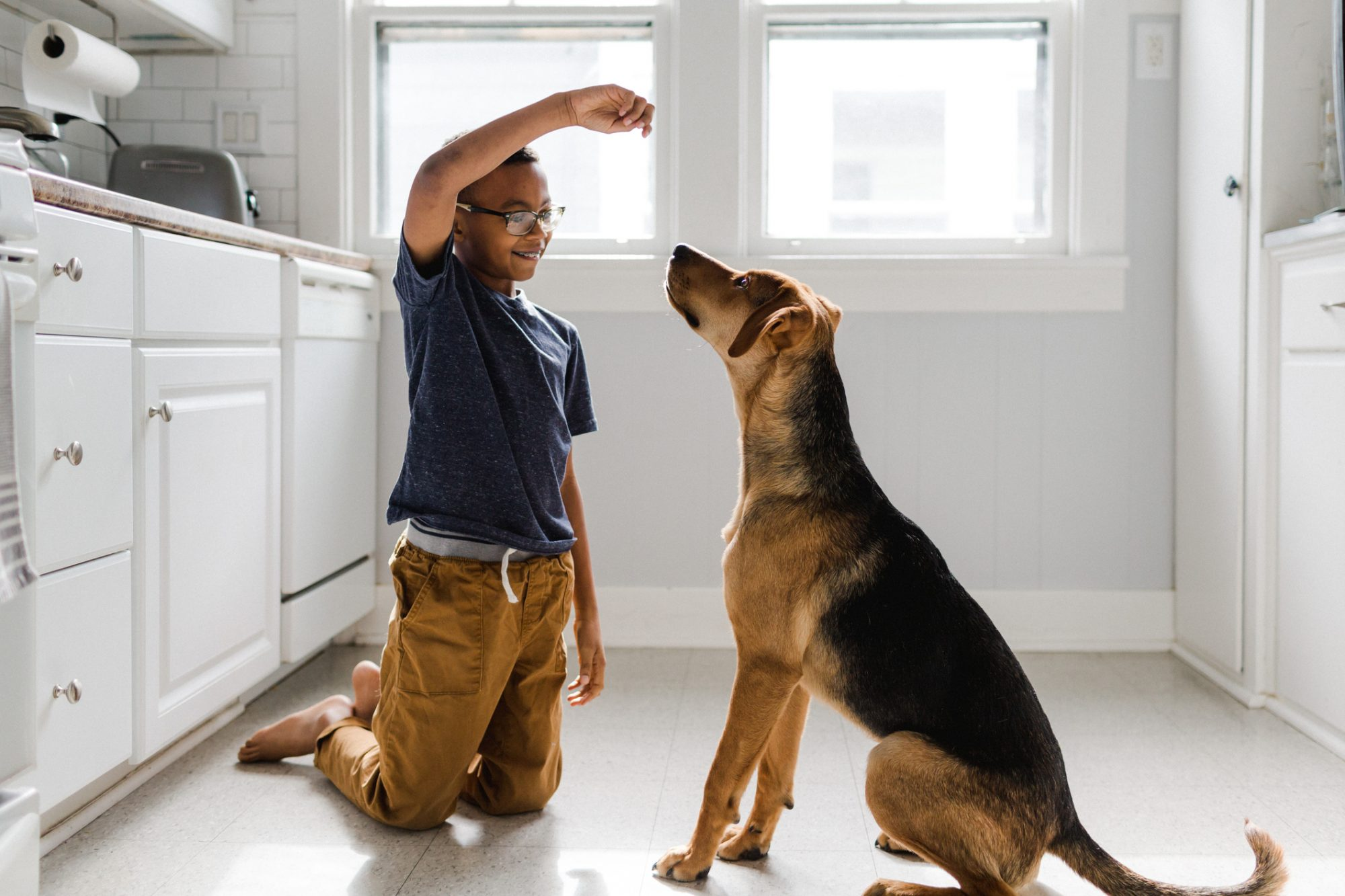 8 Basic Commands To Teach Your Dog