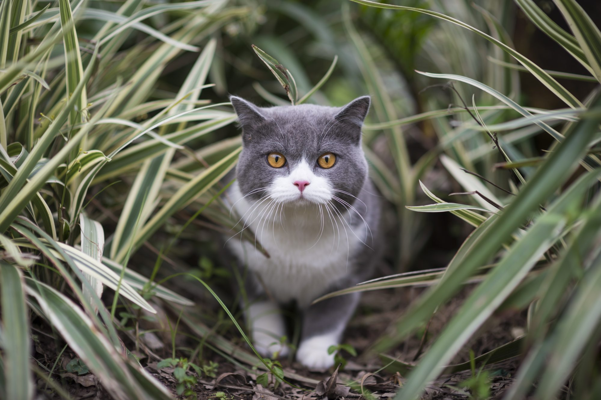 Secret Lives of Cats: Study of 900 House Cats Reveals What They Do When They Go Outside