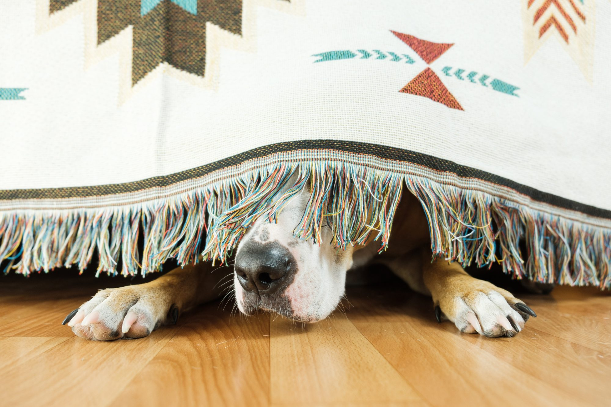 Is Your Dog Scared of Thunder? Here Are Ways To Help