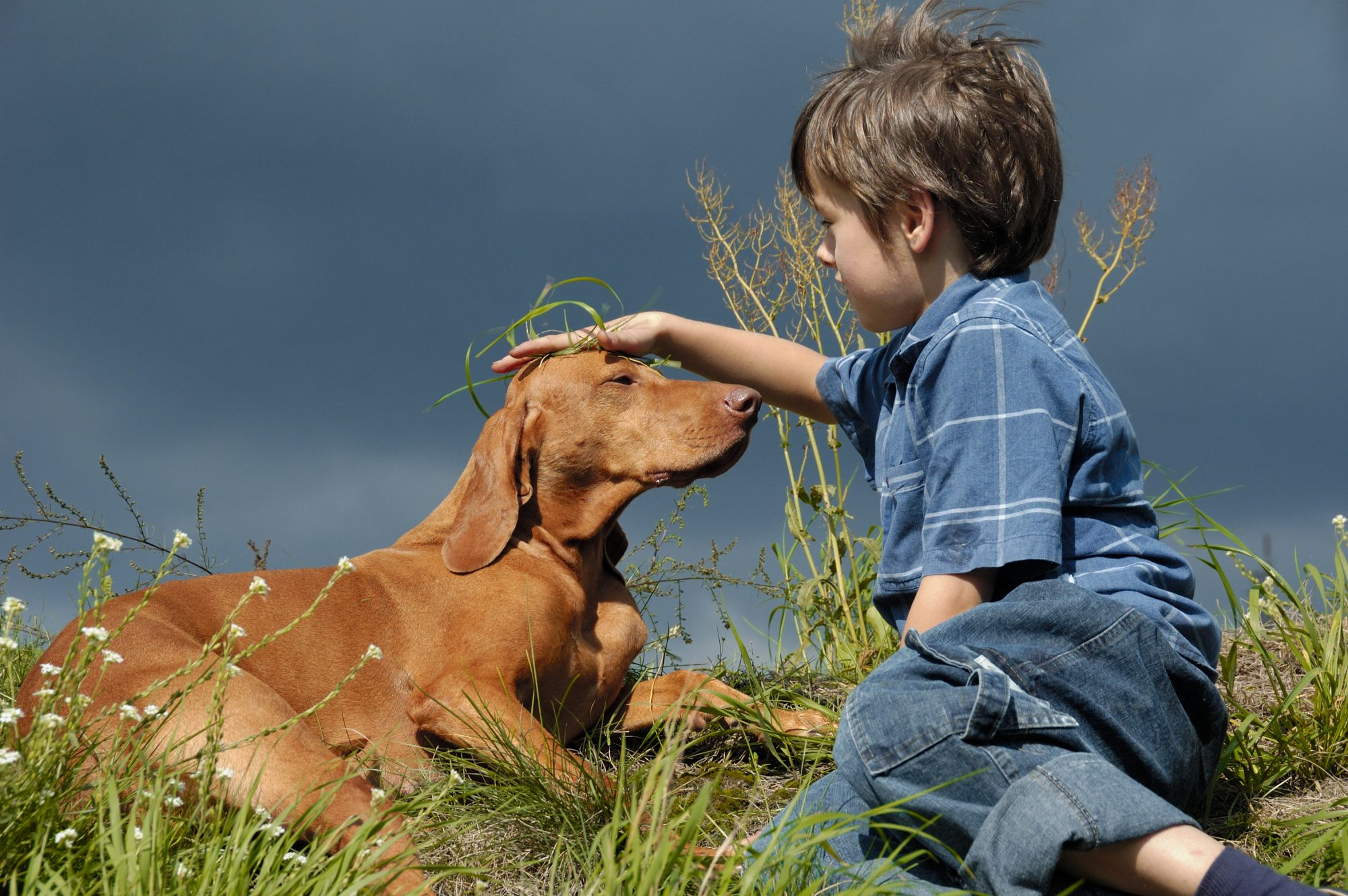 Vizsla Dog and Young Boy Playing in the Grass