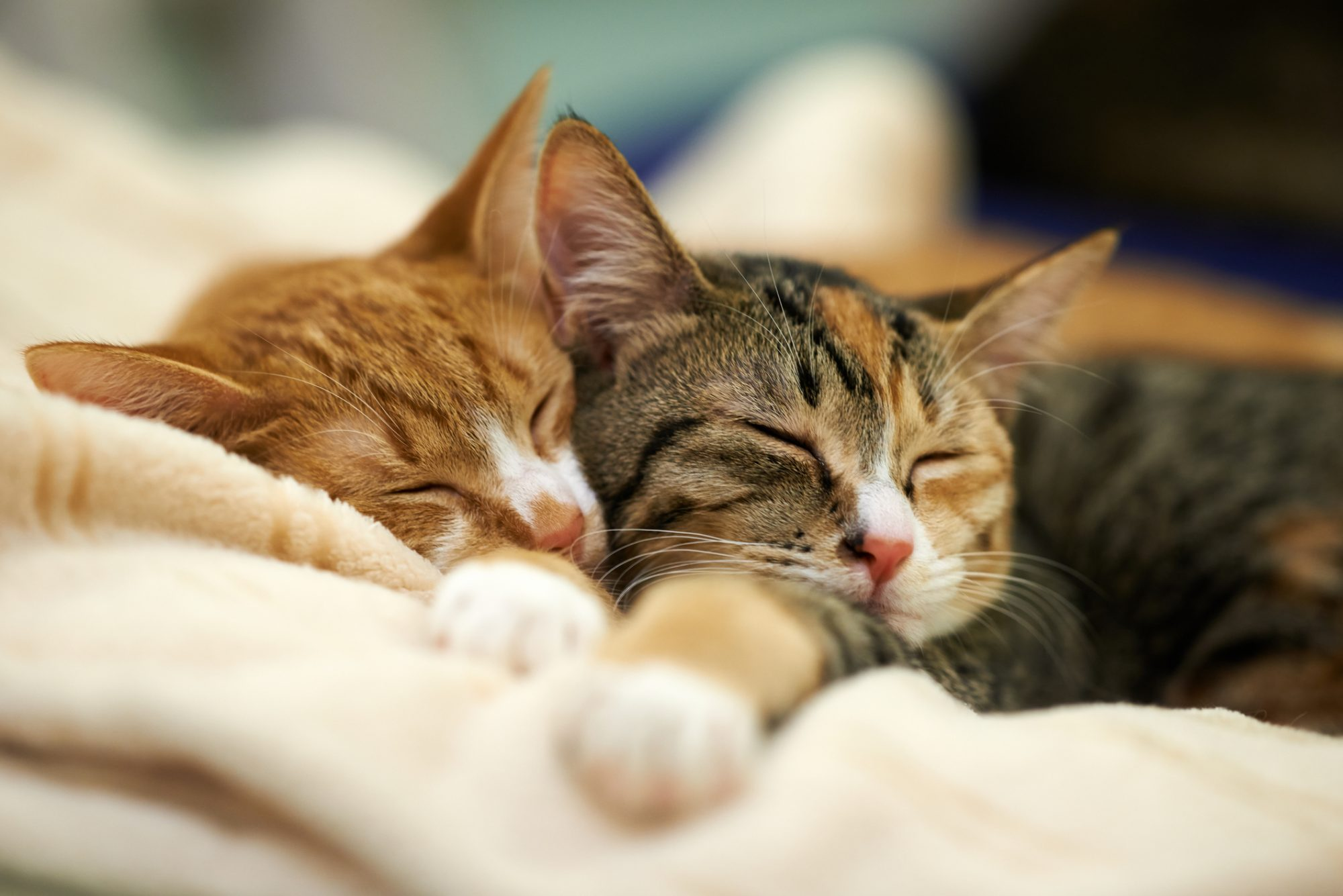Why Do Cats Sleep So Much? Reasons You Need To Know