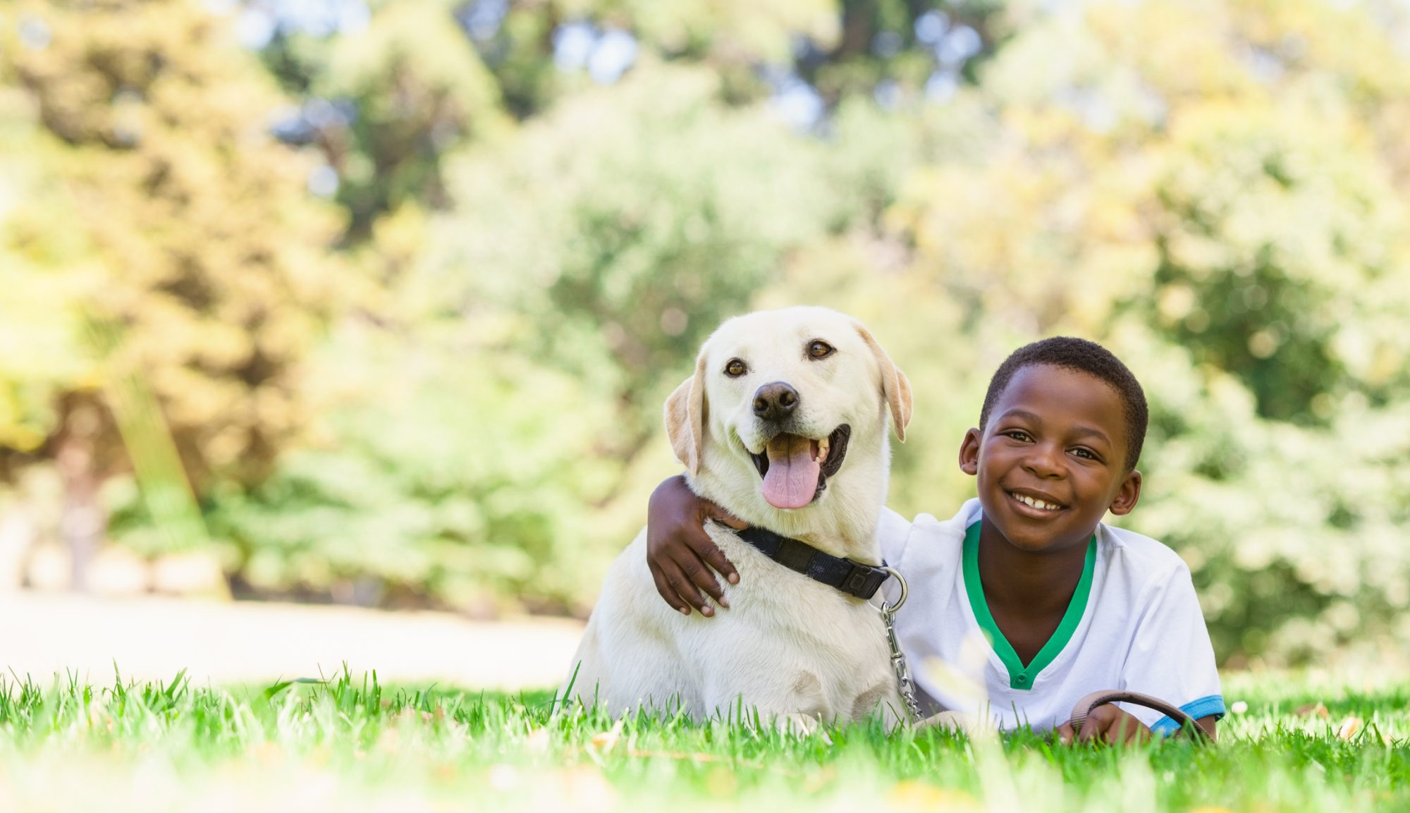 Young Boy with Labrador Retriever in Grass Field