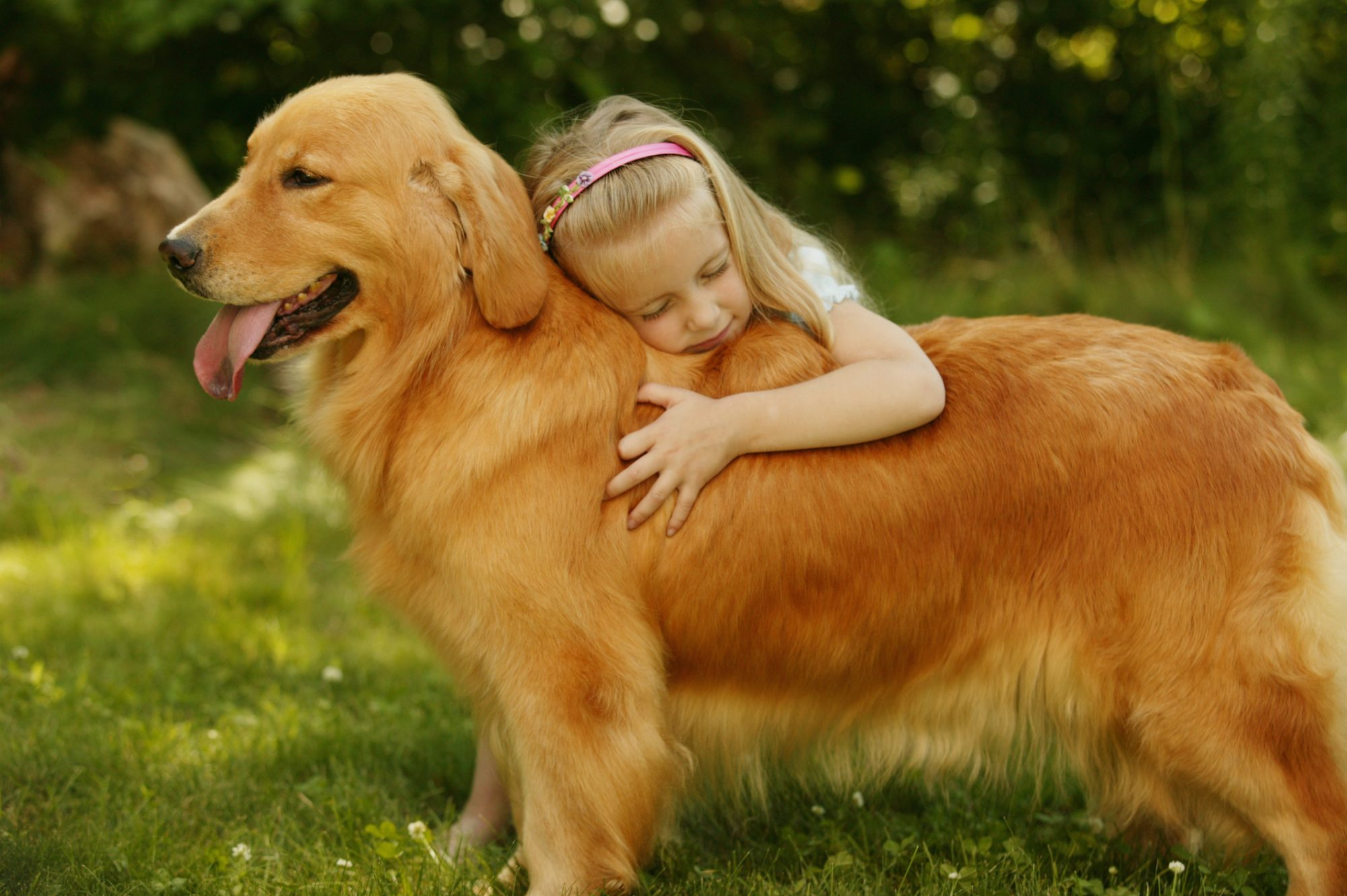 Young Girl Hugging Golden Retriever