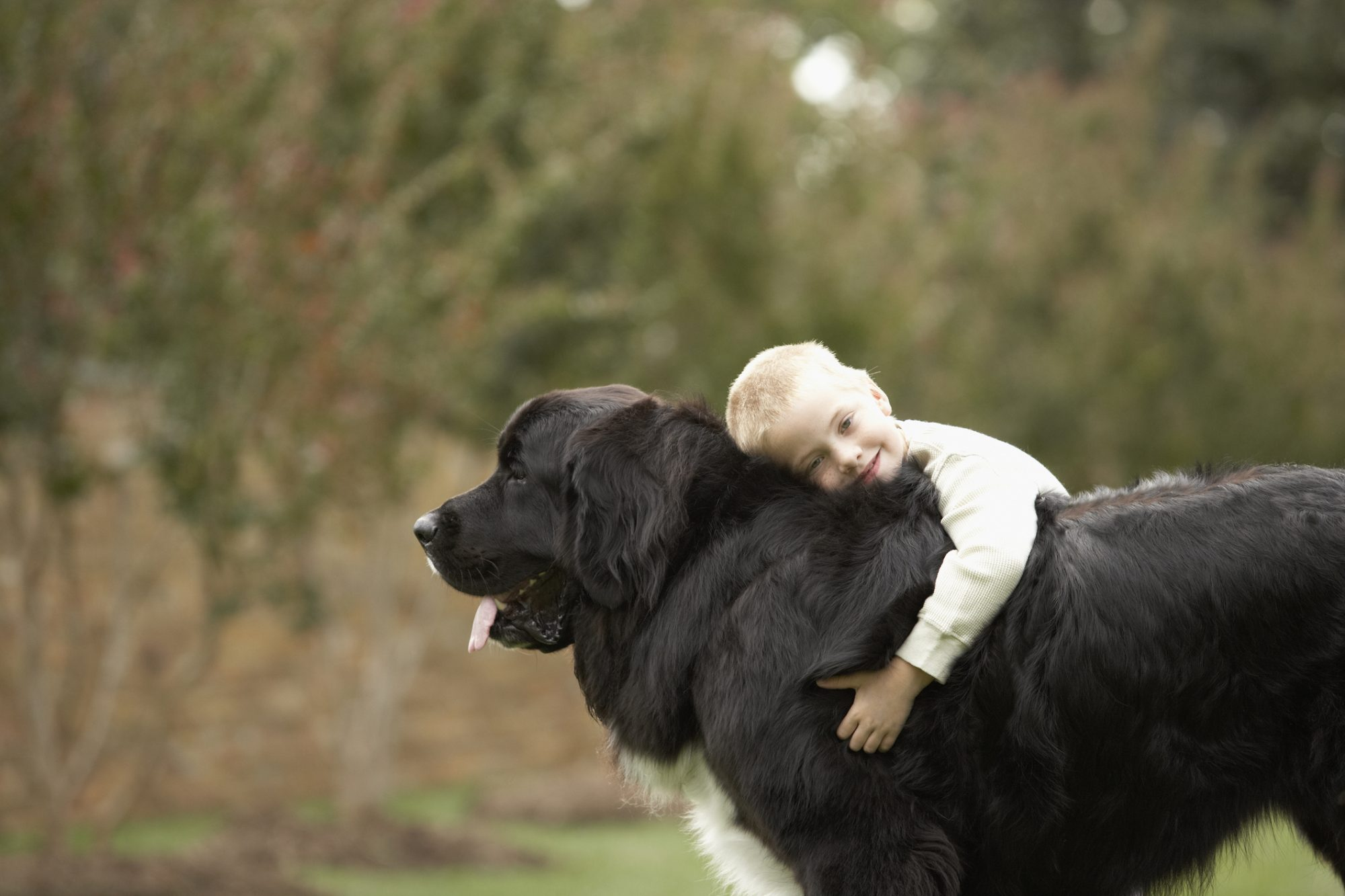Young Boy Hugging Newfoundland Dog
