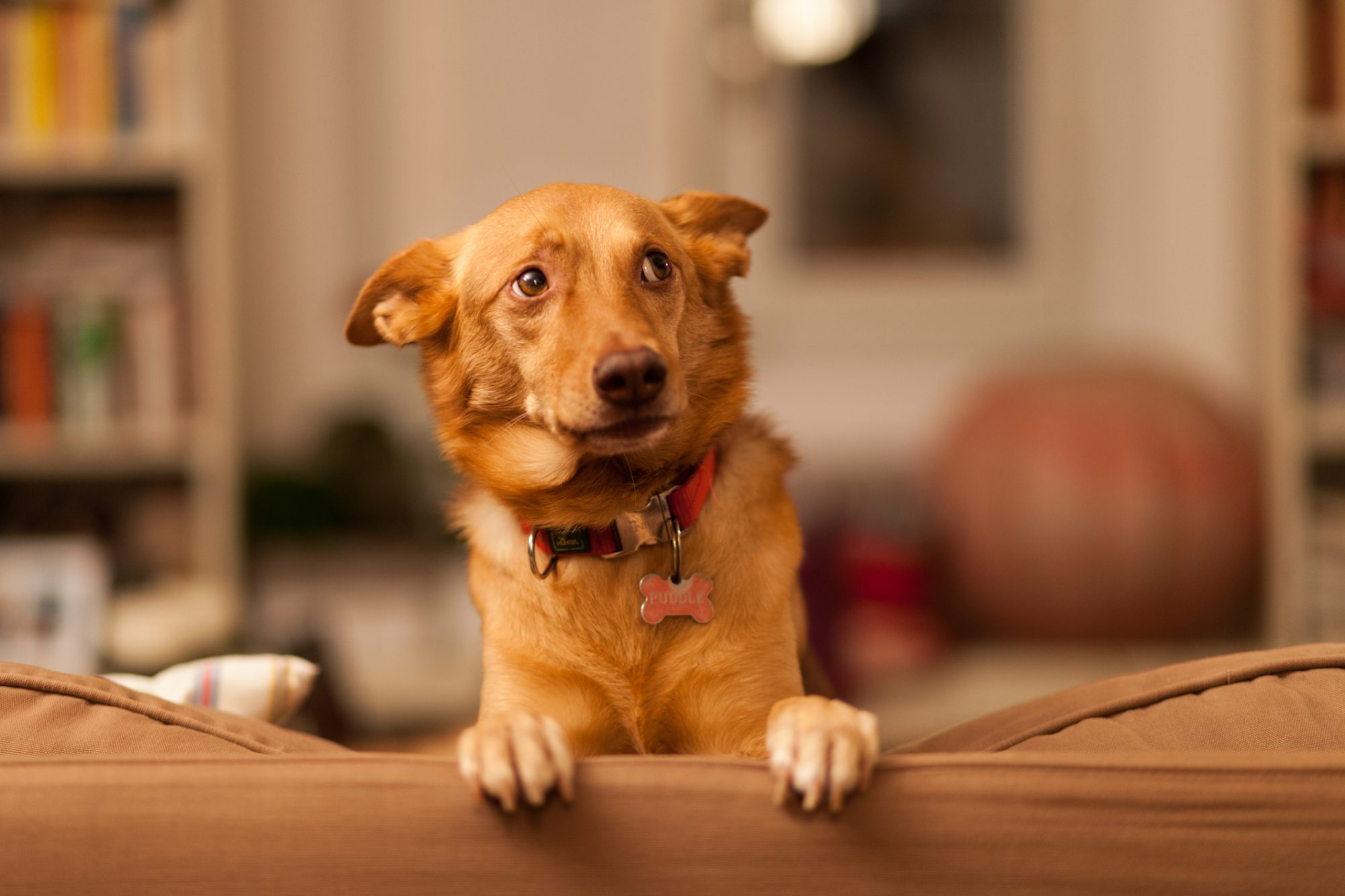 Reasons Your Dog Might Shake or Shiver