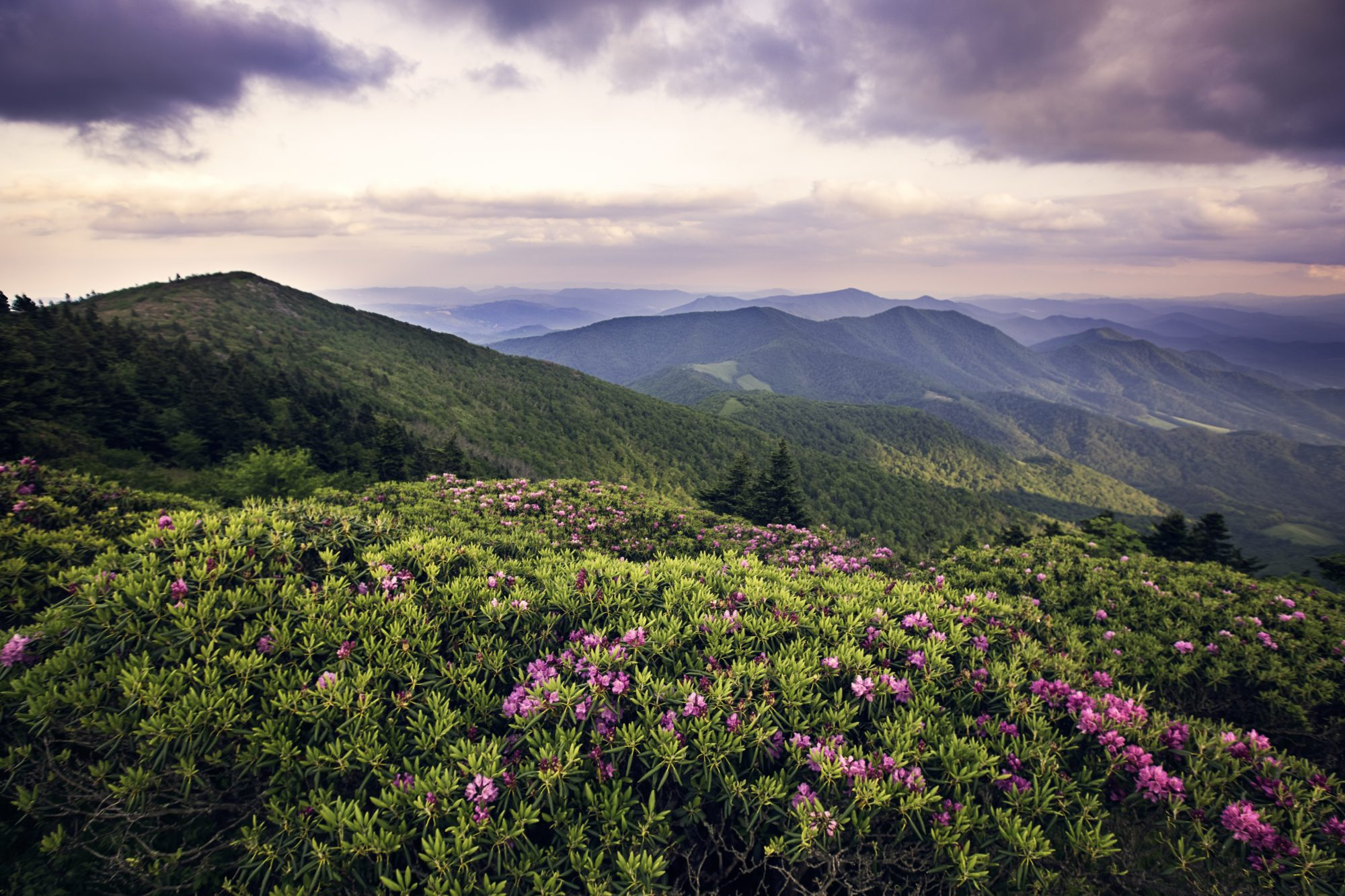 Virtually Hike the Appalachian Trail With This App