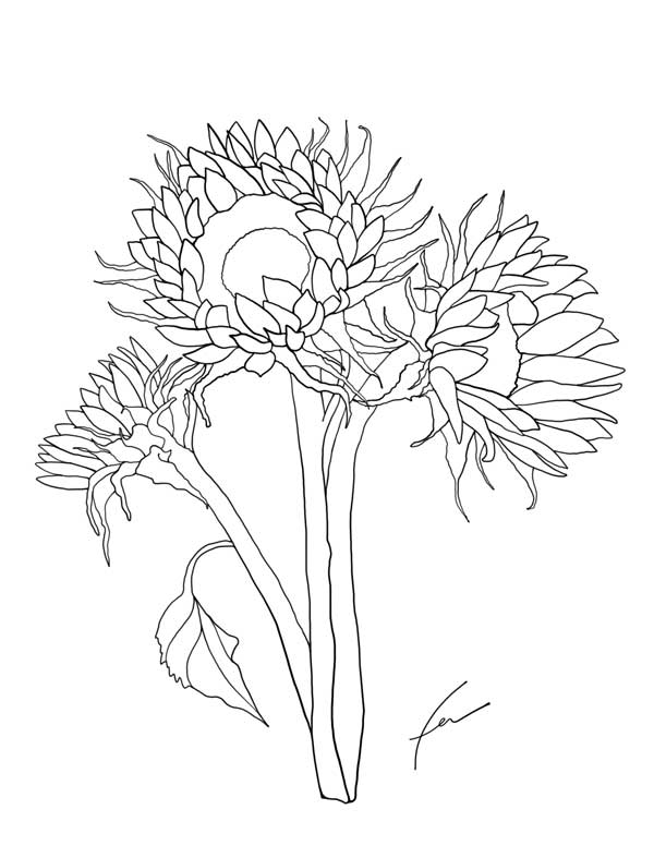 Weeds Coloring Pages - Coloring Pages Kids 2019 | 776x600