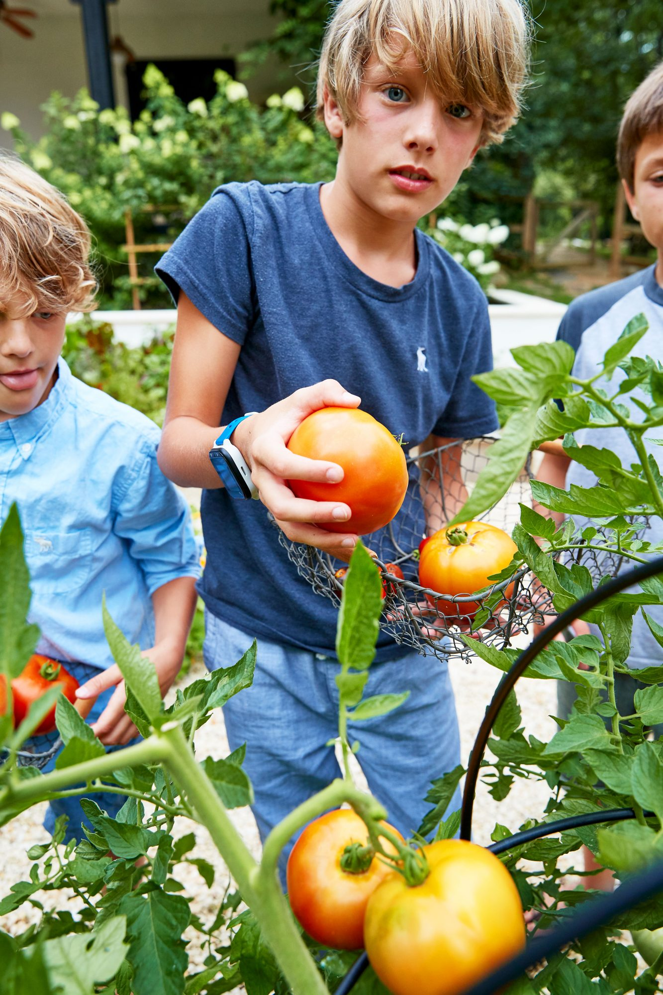 Lauren Liess's Sons Picking Tomatoes in the Vegetable Garden