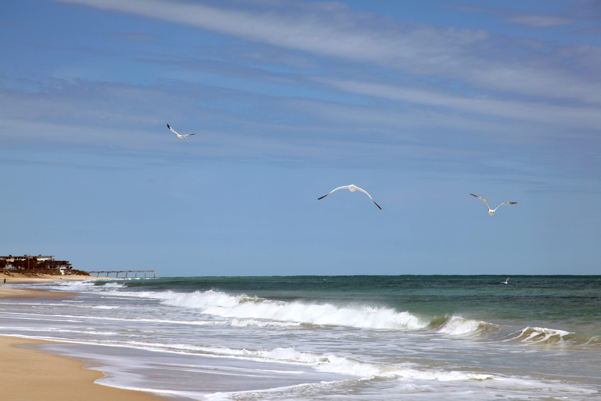 A gull soaring over Vero Beach, Florida
