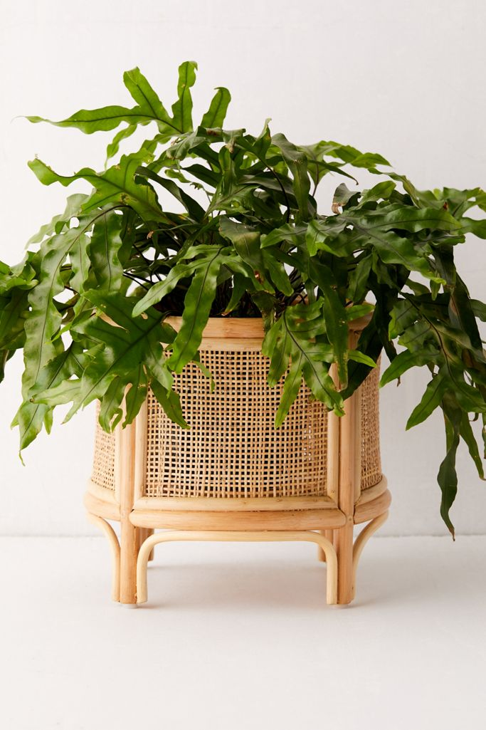 "For the Plants: Rattan 12"" Planter"
