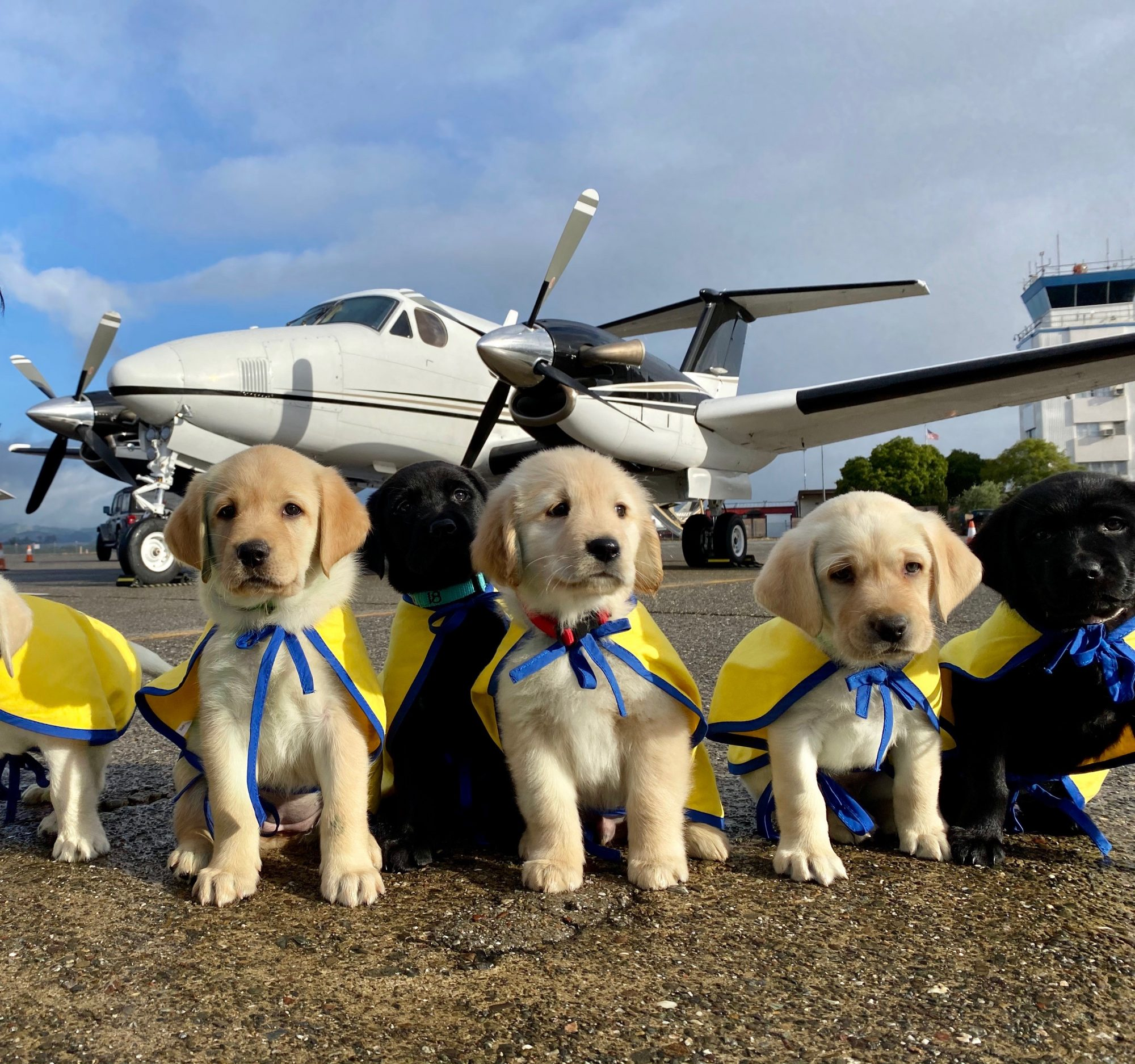 Canine Companions puppies ready for take off