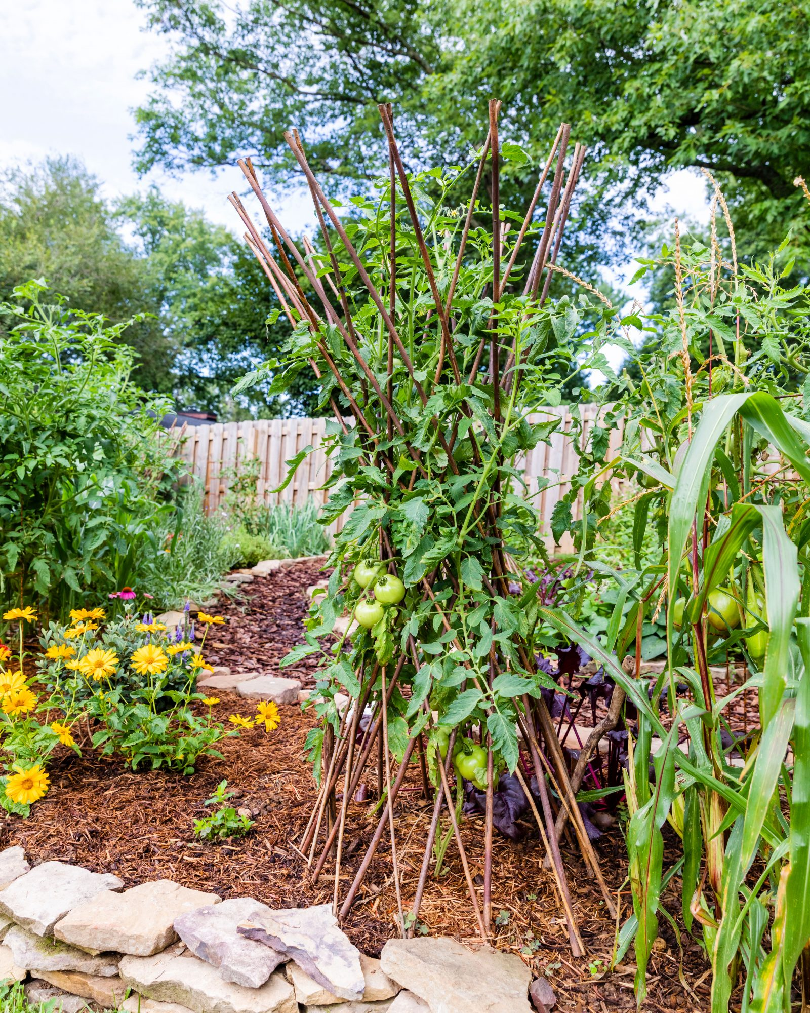 Tomato Trellises and flowers in vegetable garden
