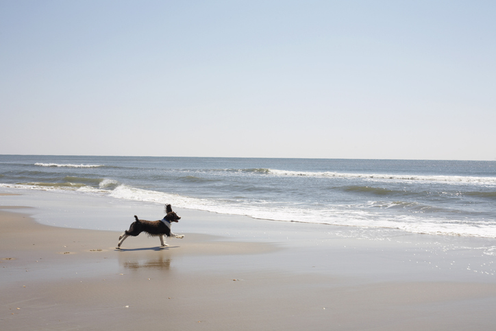In a state blessed with extraordinary beaches from one end to the other, this barrier island beach has deep Outer Banks magic: 16 miles of undeveloped dunes and wild sands that lure everyone from sunbathers and sandcastle builders to shell-hunters and sur