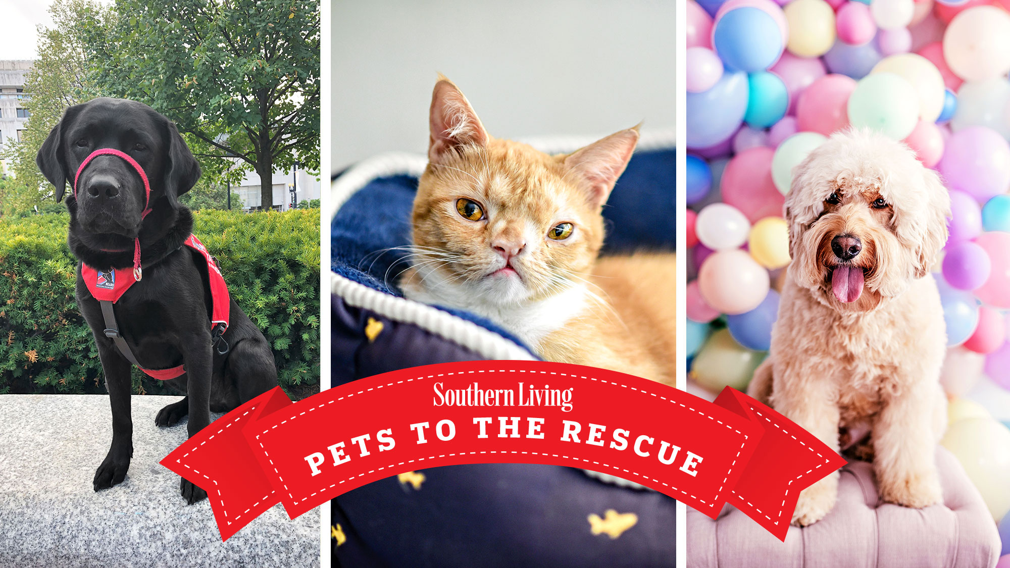 Pepper, Smush, and Charlie for Summer 2020 Pets to the Rescue