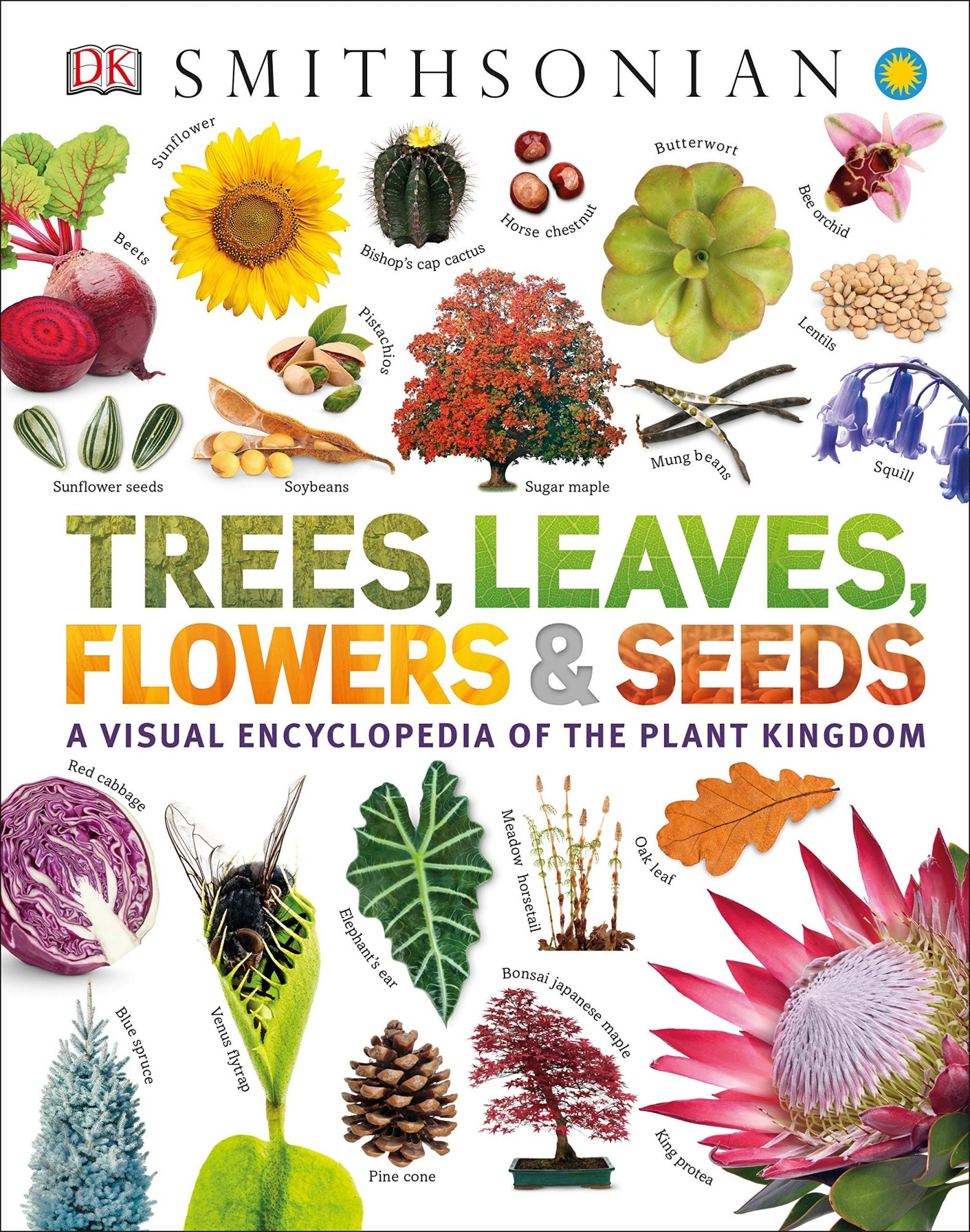 Trees, Leaves, Flowers and Seeds: A Visual Encyclopedia of the Plant Kingdom by Sarah Jose and Smithsonian Institution