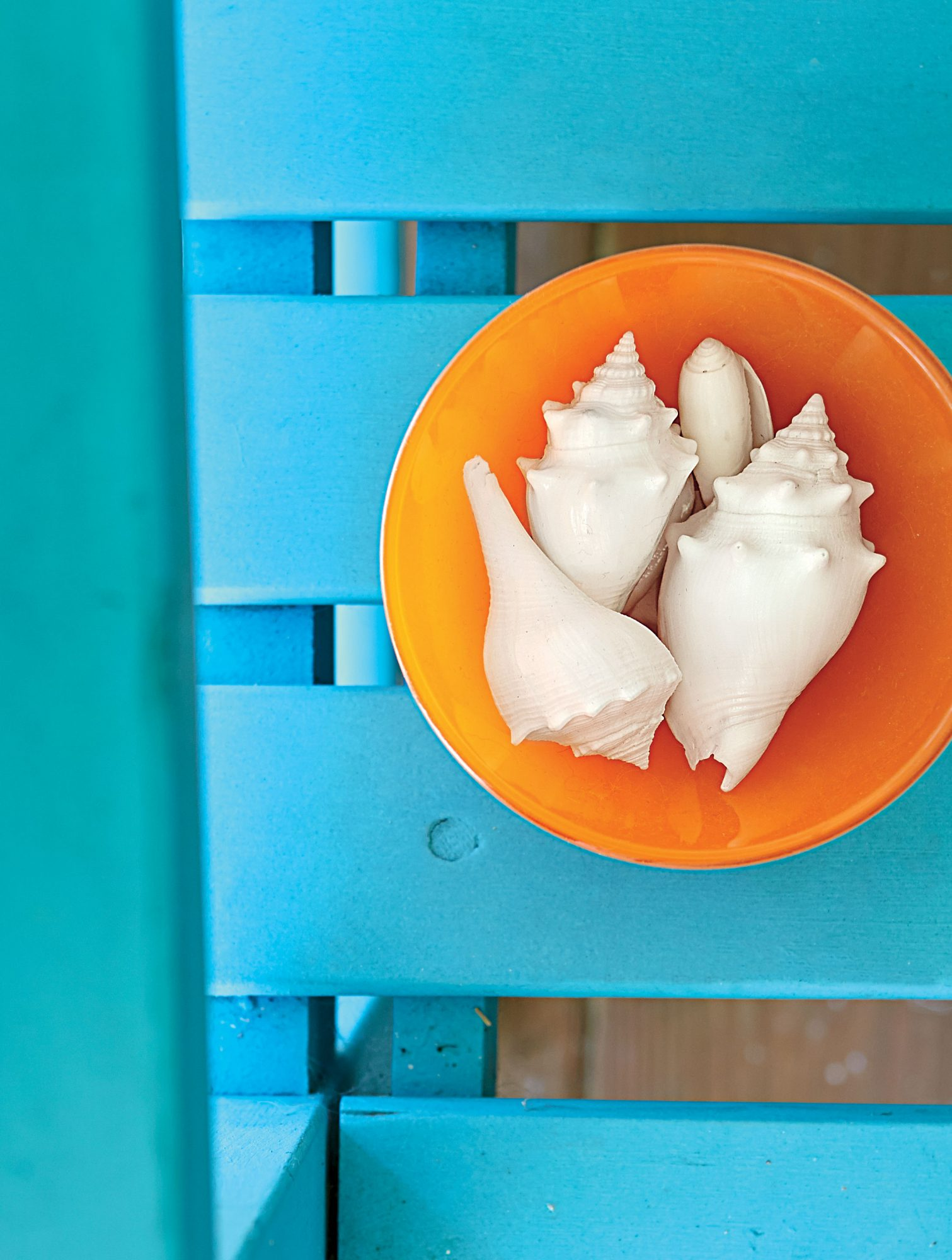 """Sanibel is widely known as """"the shell capital of the world."""" The shelling is superior here because unlike other islands, which generally run from north to south, Sanibel lies east to west."""