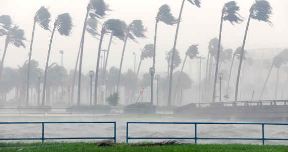 Palm trees sway in rain and fog, western eye wall of Hurricane Matthew