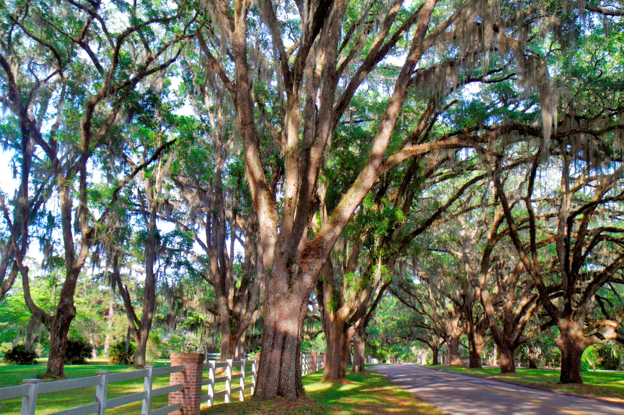 Leon County Canopy Roads in Florida