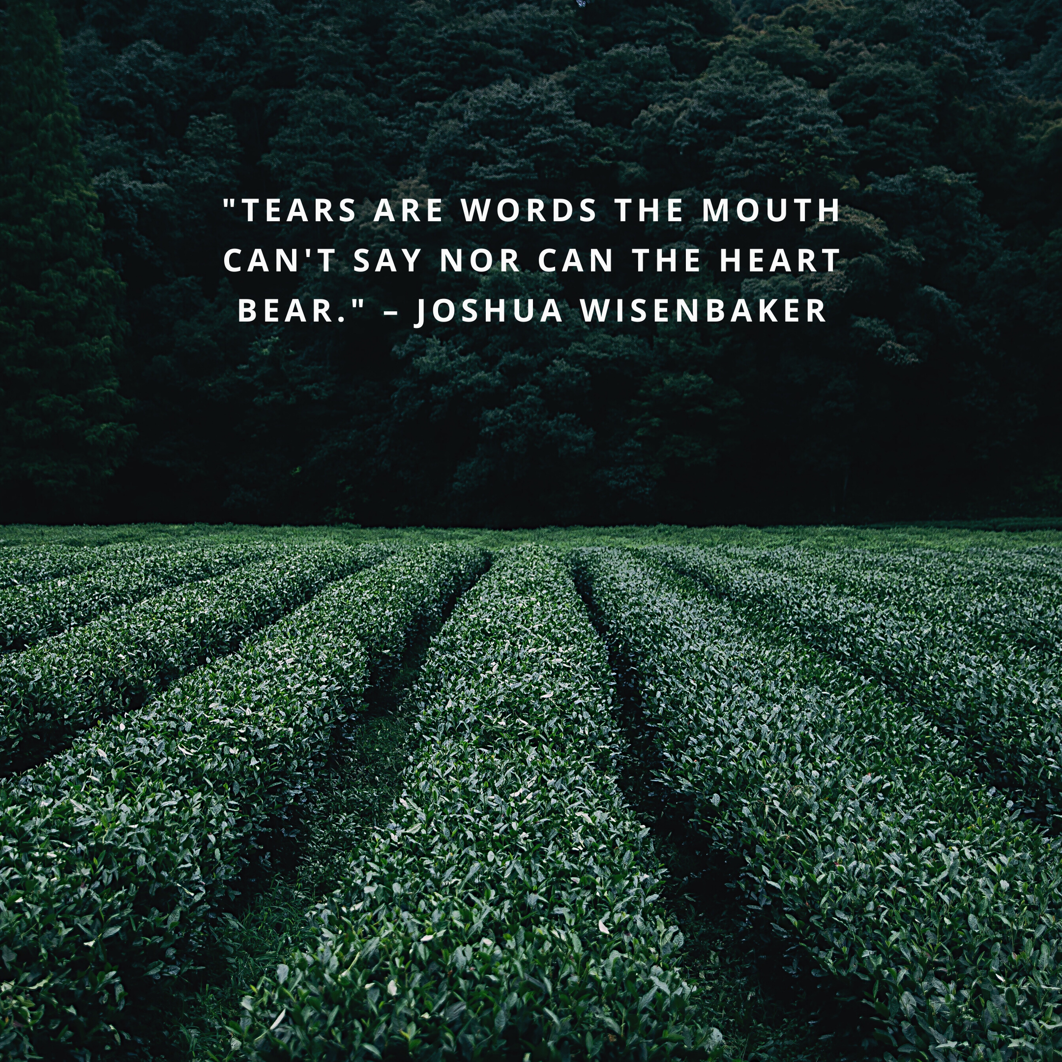 """""""Tears are words the mouth can't say nor can the heart bear."""" –Joshua Wisenbaker"""