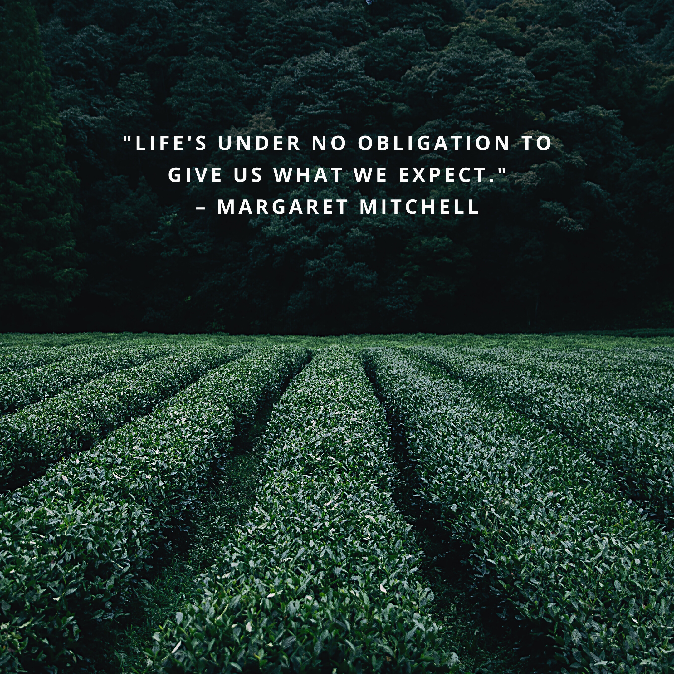 """""""Life's under no obligation to give us what we expect."""" –Margaret Mitchell"""