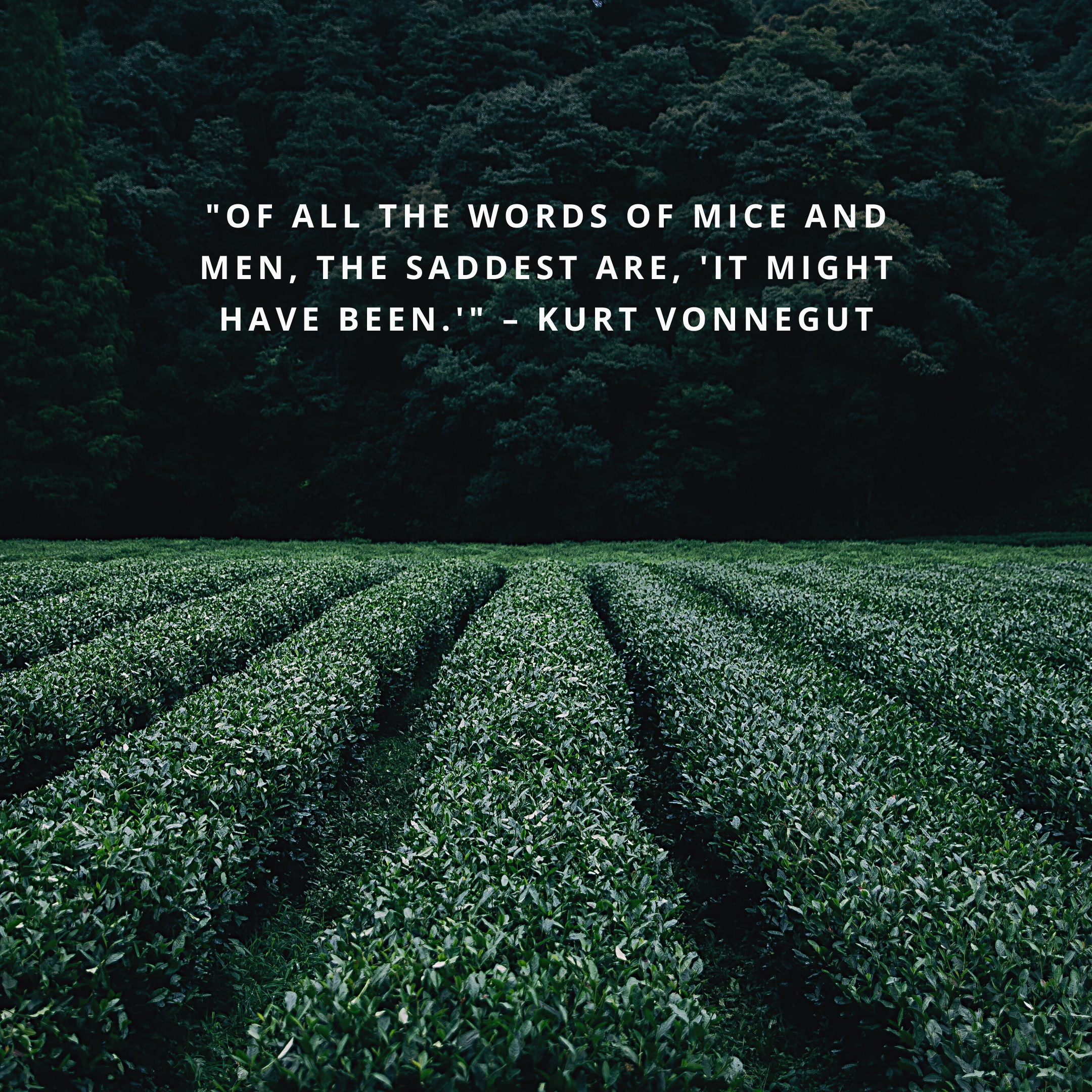 """""""Of all the words of mice and men, the saddest are, 'It might have been.'"""" –Kurt Vonnegut"""