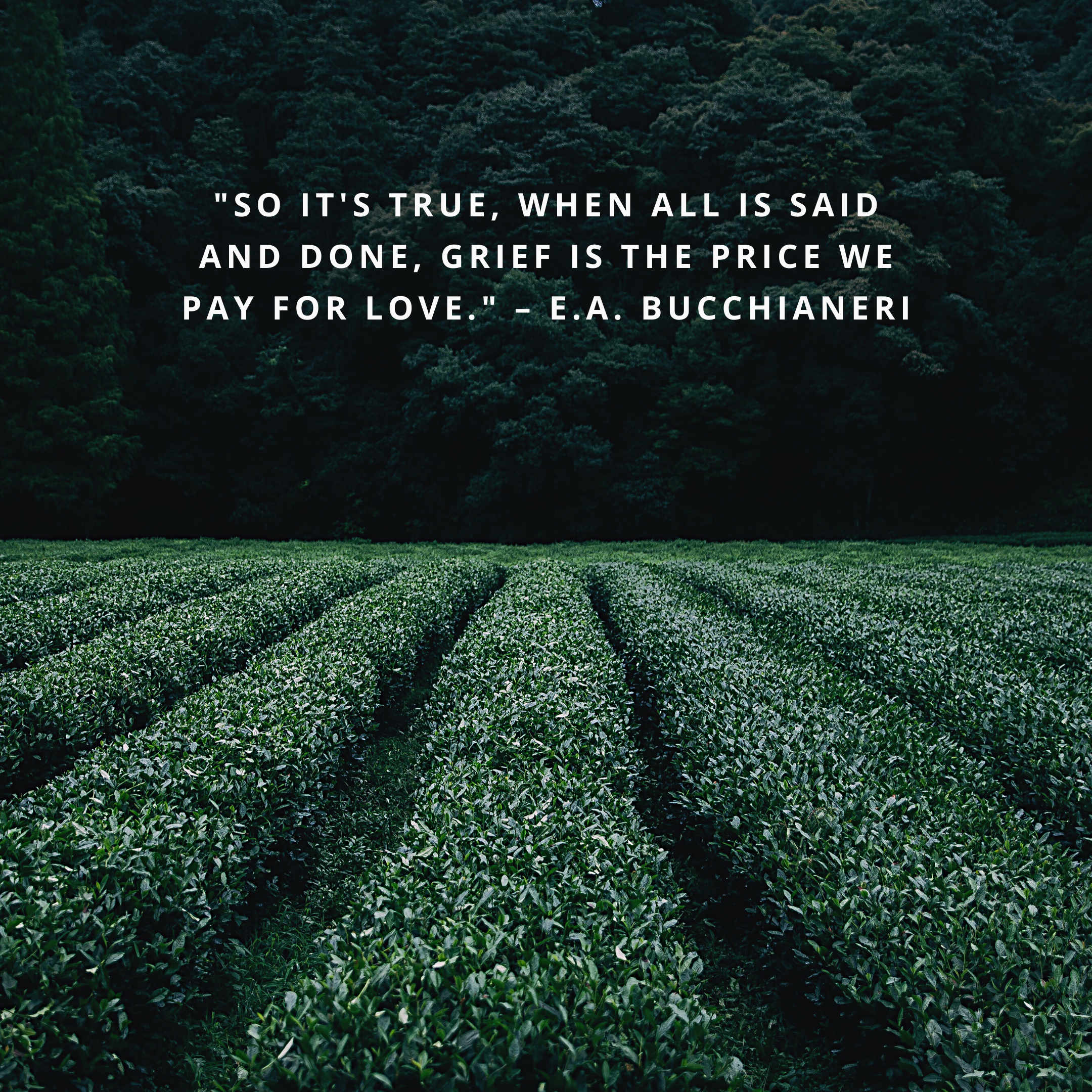 """""""So it's true, when all is said and done, grief is the price we pay for love."""" –E.A. Bucchianeri"""
