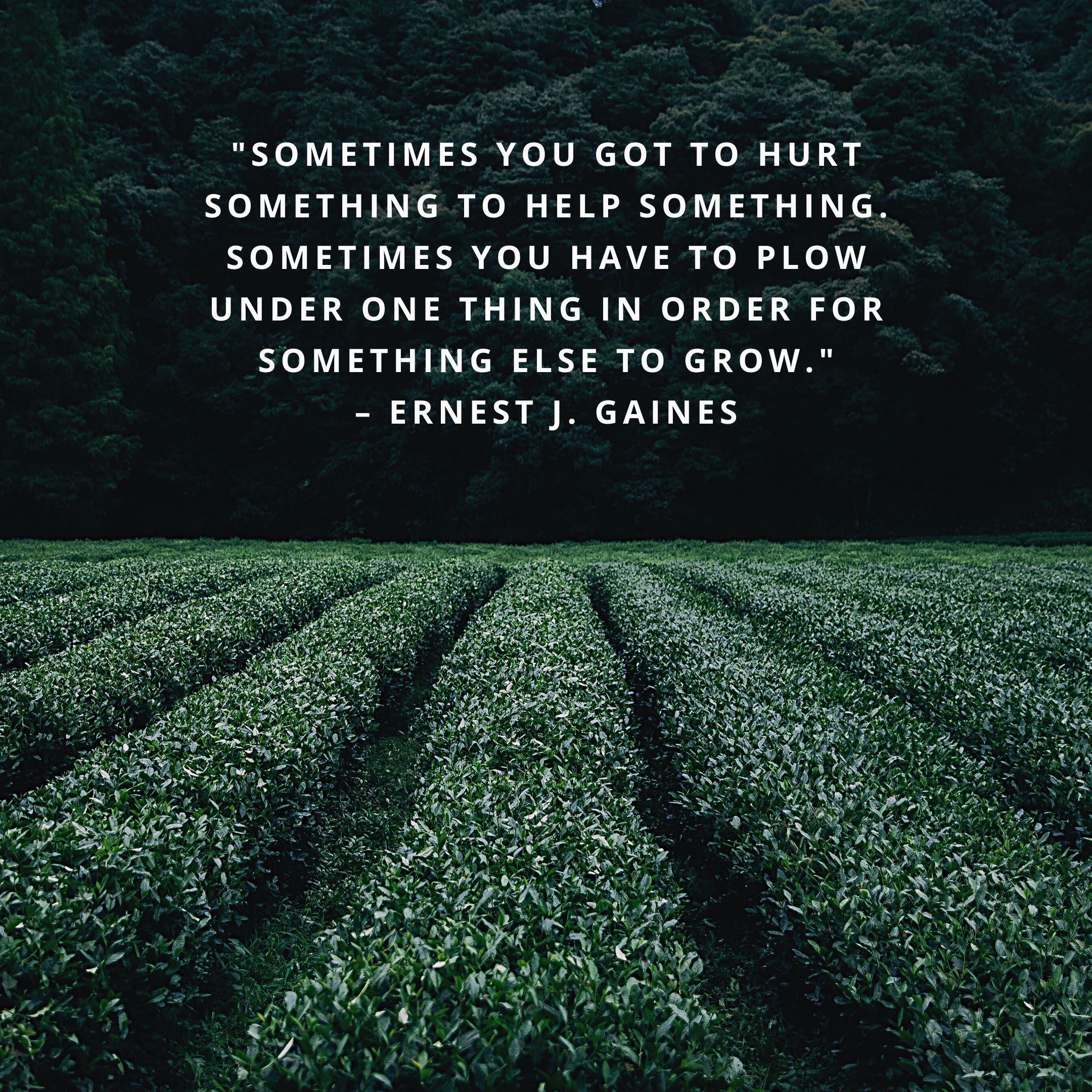 """""""Sometimes you got to hurt something to help something. Sometimes you have to plow under one thing in order for something else to grow."""" –Ernest J. Gaines"""