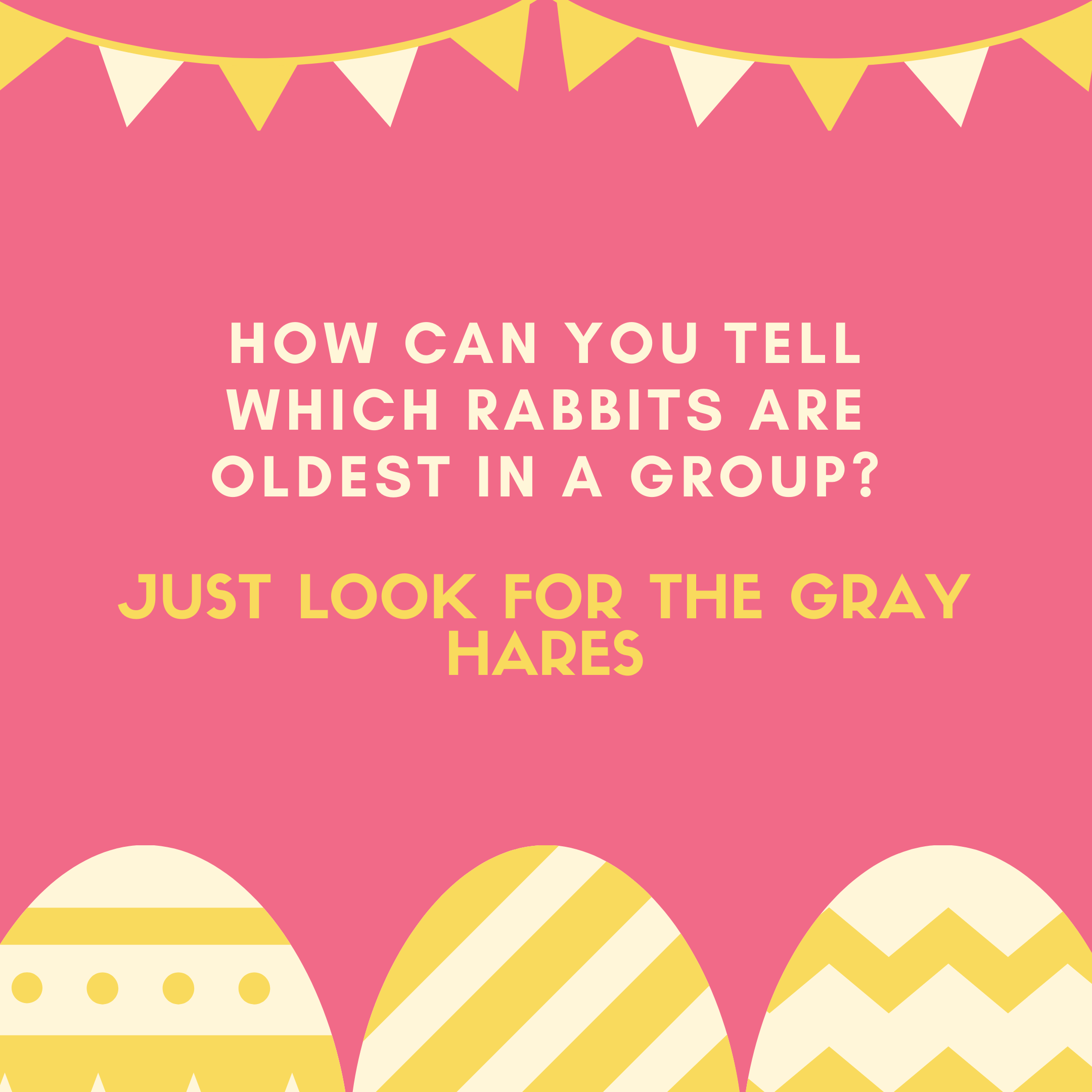 How can you tell which rabbits are oldest in a group? Just look for the gray hares