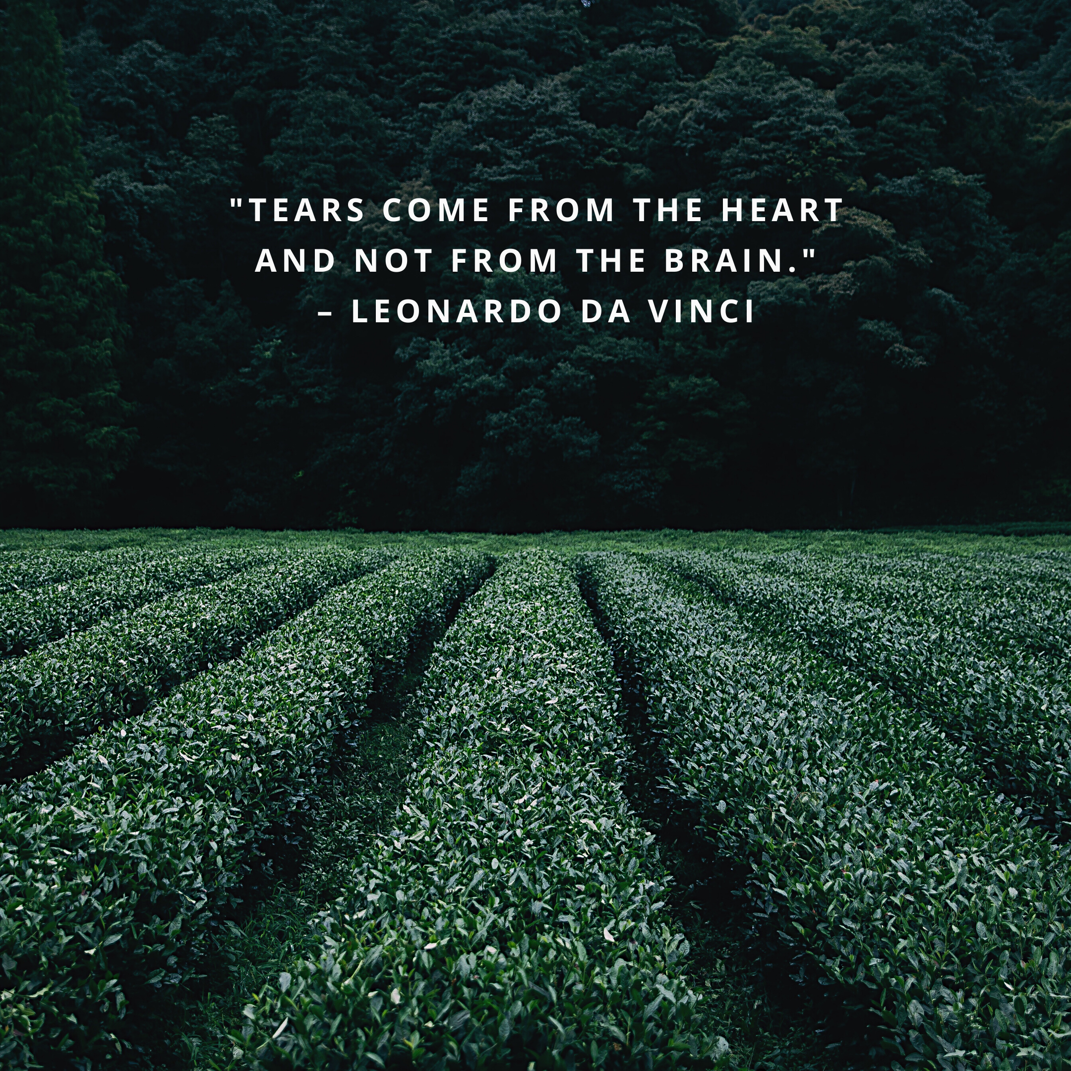 """""""Tears come from the heart and not from the brain."""" –Leonardo da Vinci"""