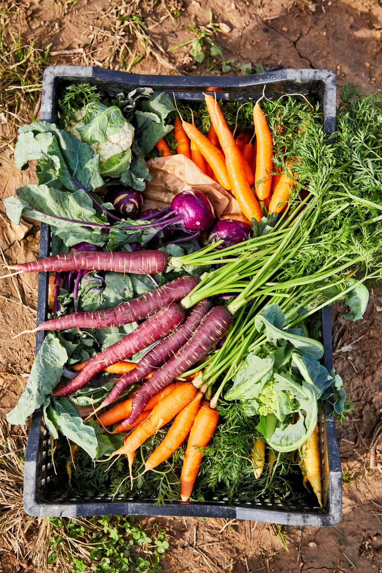 Fall produce from Gaining Ground Farm in North Carolina