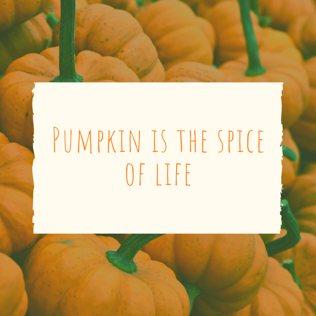 Pumpkin Patch Captions Life of Spice