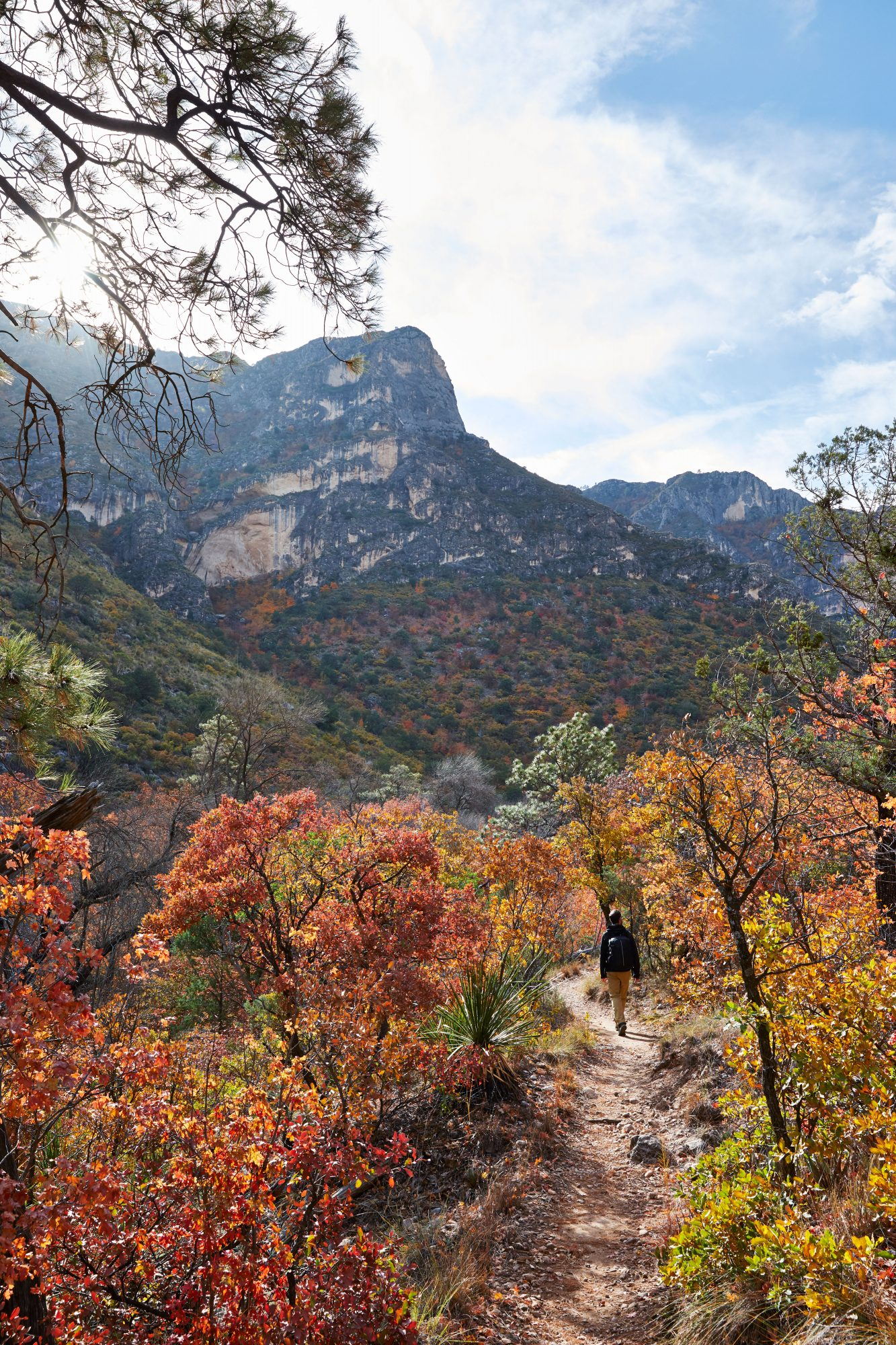 McKittrick Canyon in Guadalupe Mountains National Park in West Texas