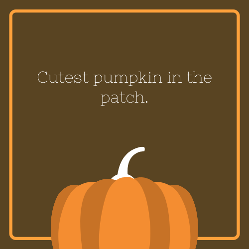 Cutest Pumpkin in the Patch Halloween Quote