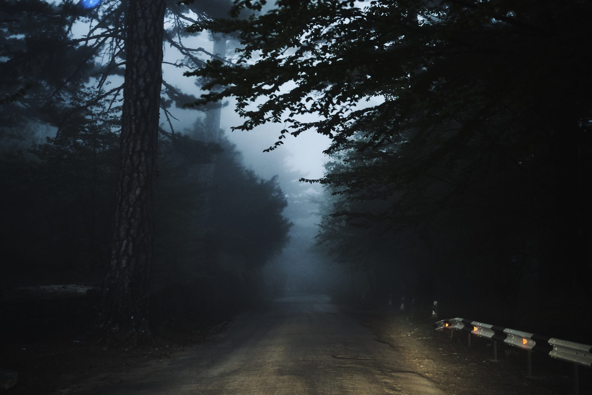 Scary Road in forest
