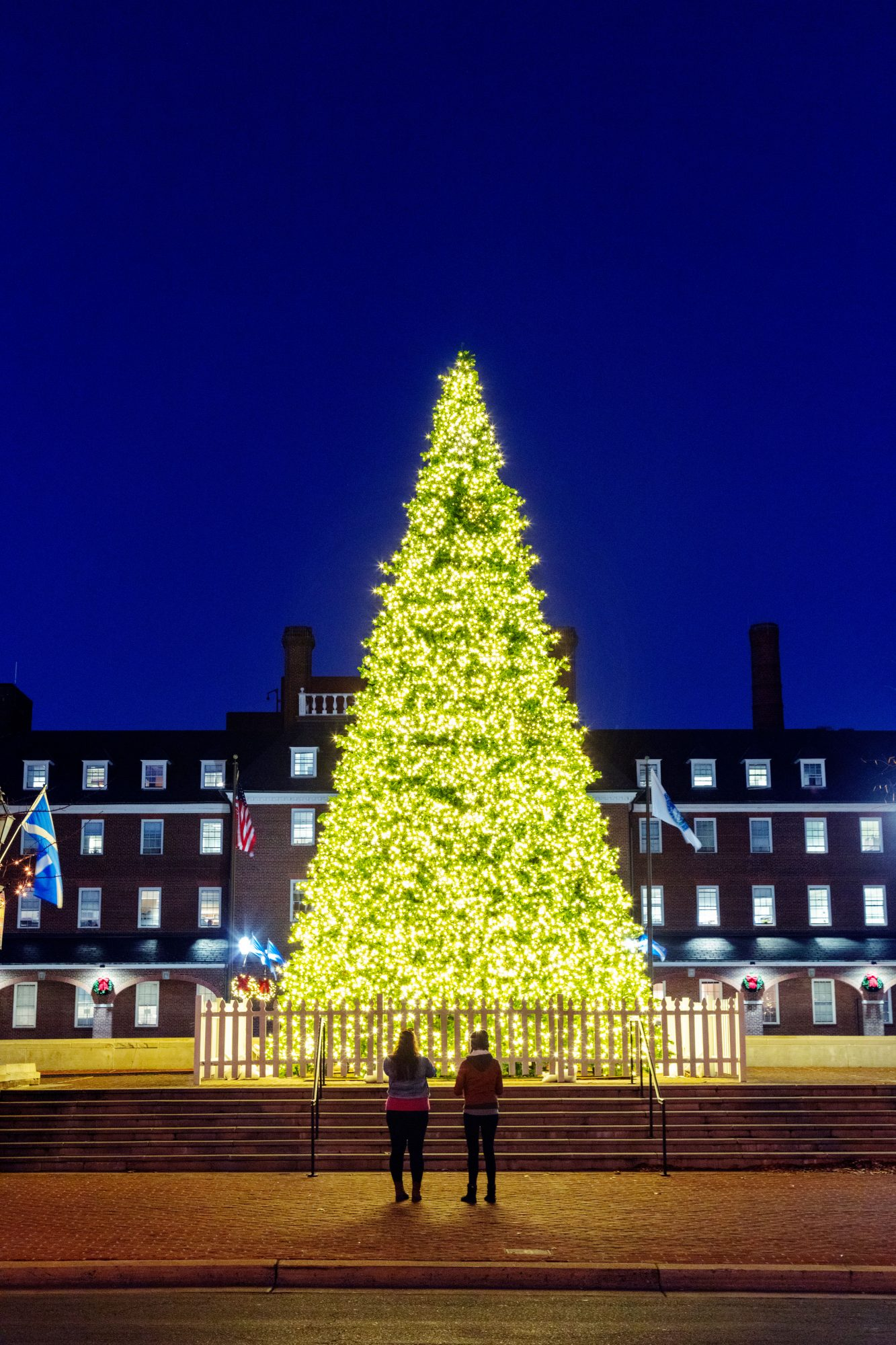 The Christmas tree on Market Square in Alexandria, VA