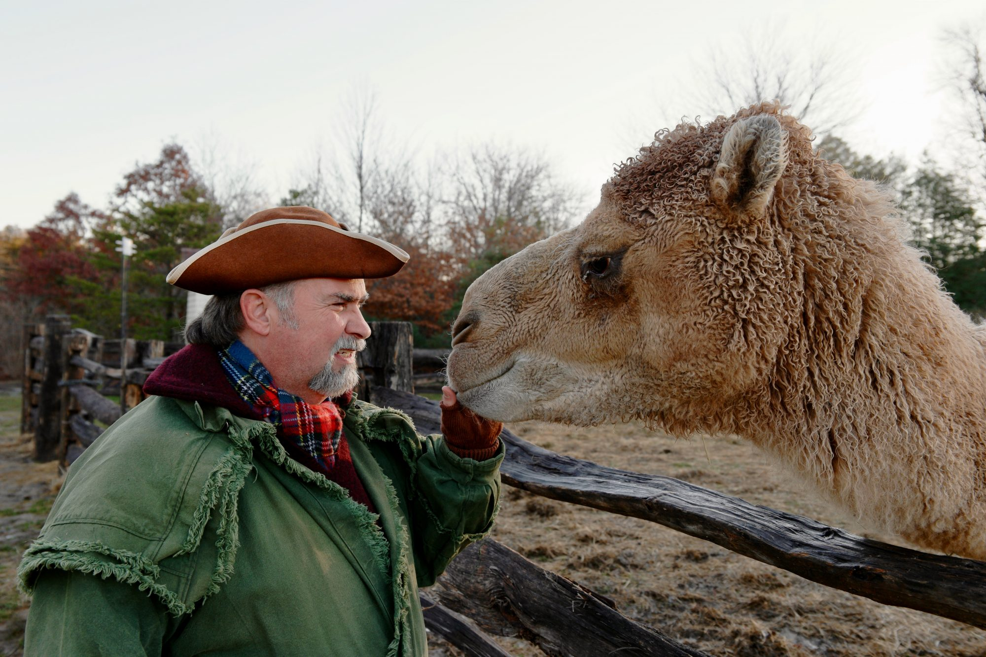 Aladdin the Mount Vernon Camel