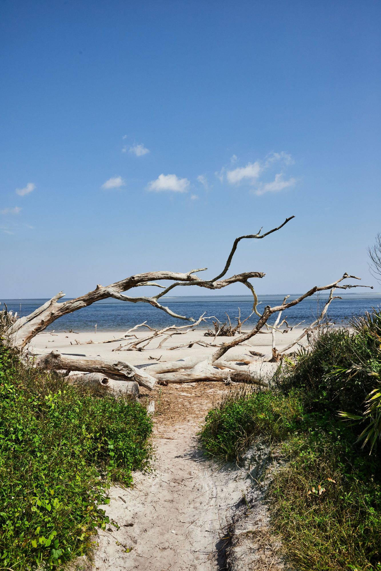 Little Talbot Island, FL beaches with whitewashed tree remnants