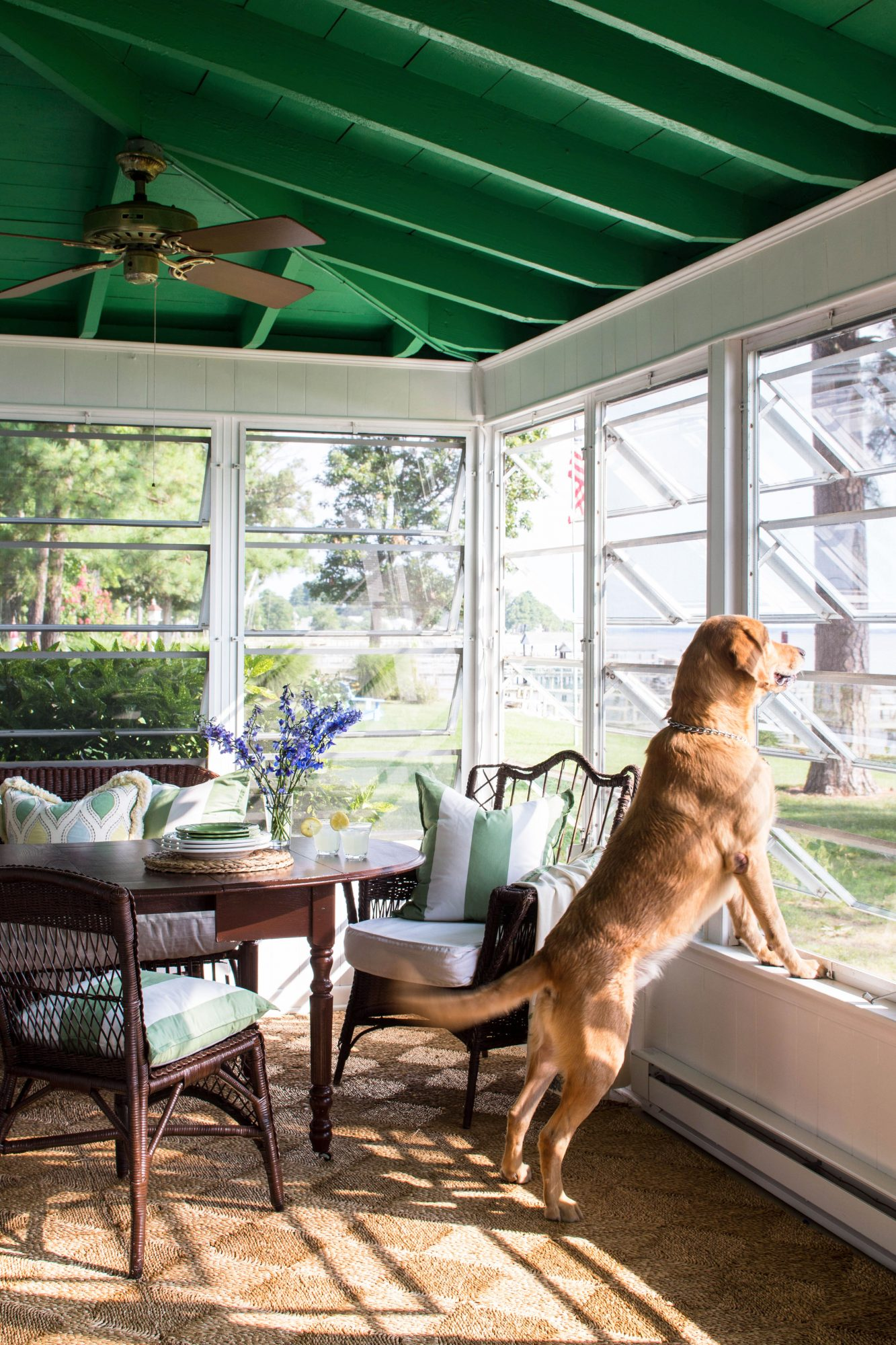 Sunroom with green ceiling and hand-crank jalousie windows with golden retriever looking out