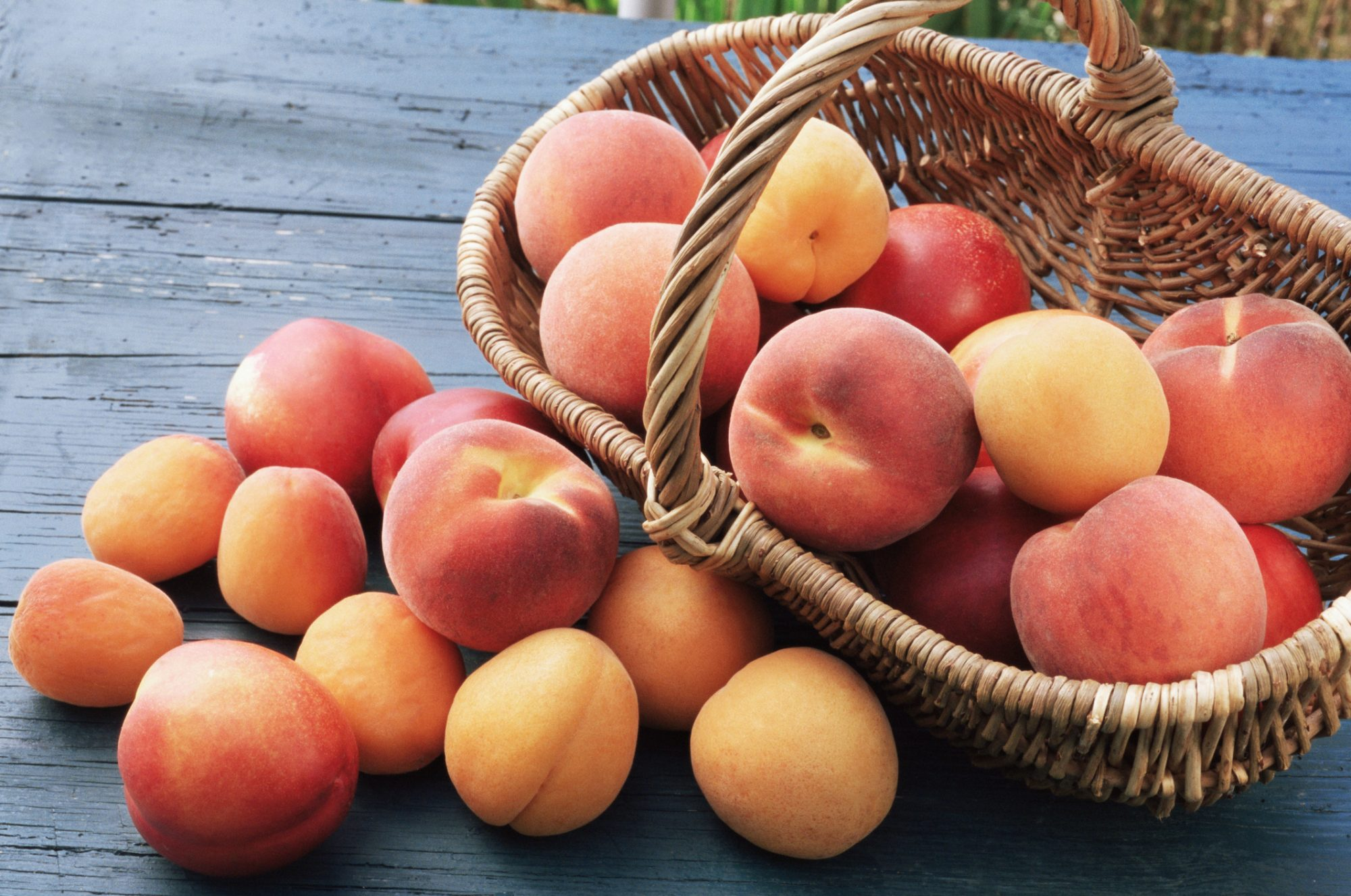 Basket of peaches and apricots
