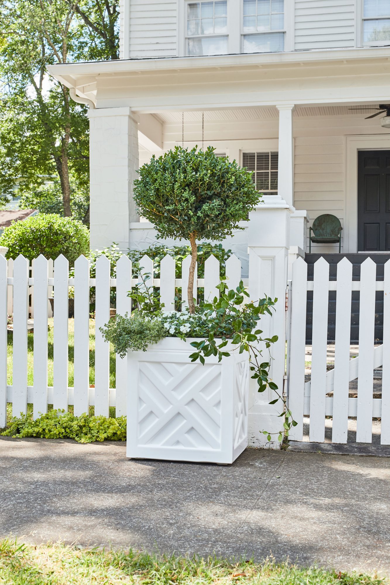 White container with boxwood topiary, phlox, star jasmine, and lemon thyme