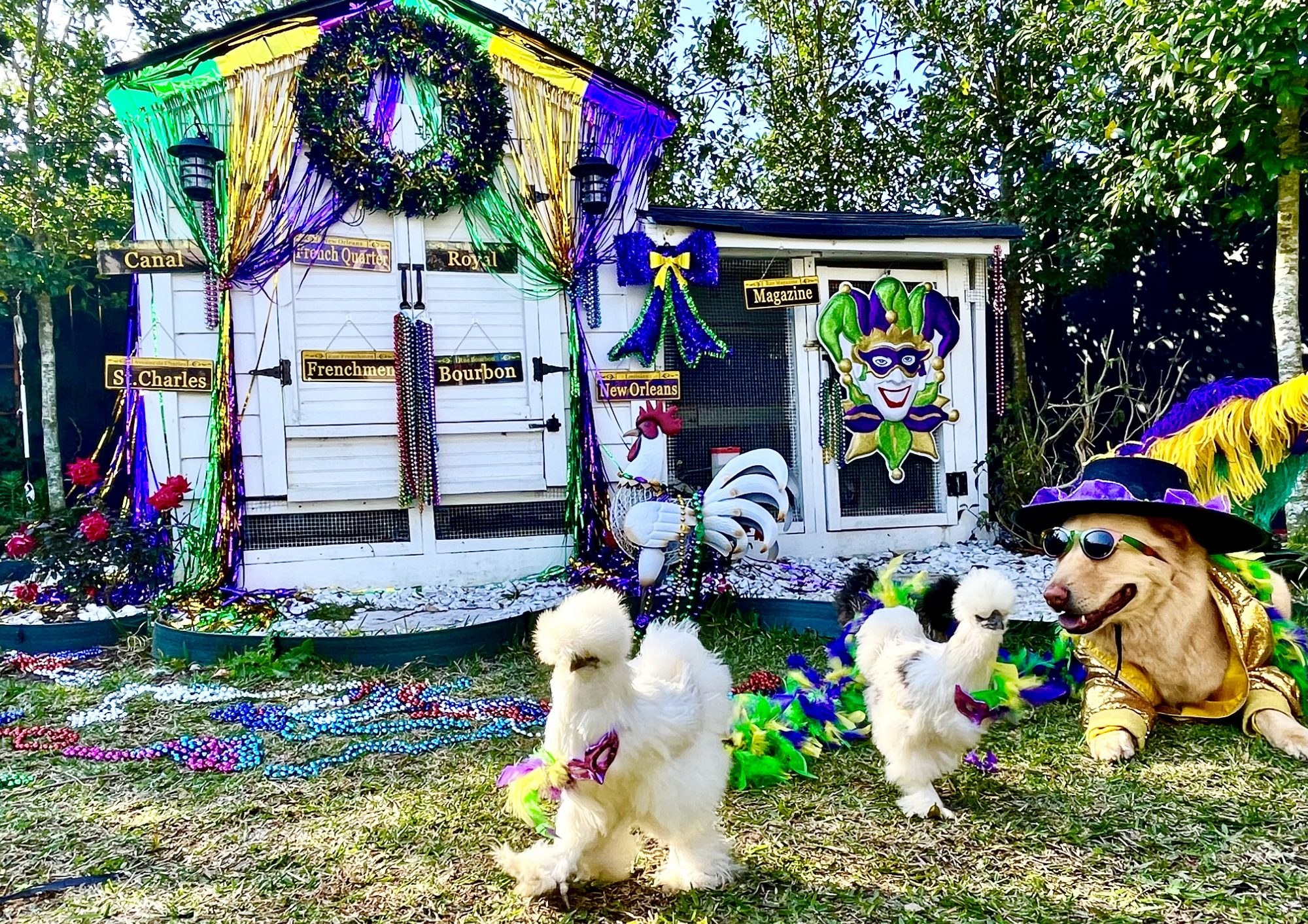 Mardi Paws Dog House Float