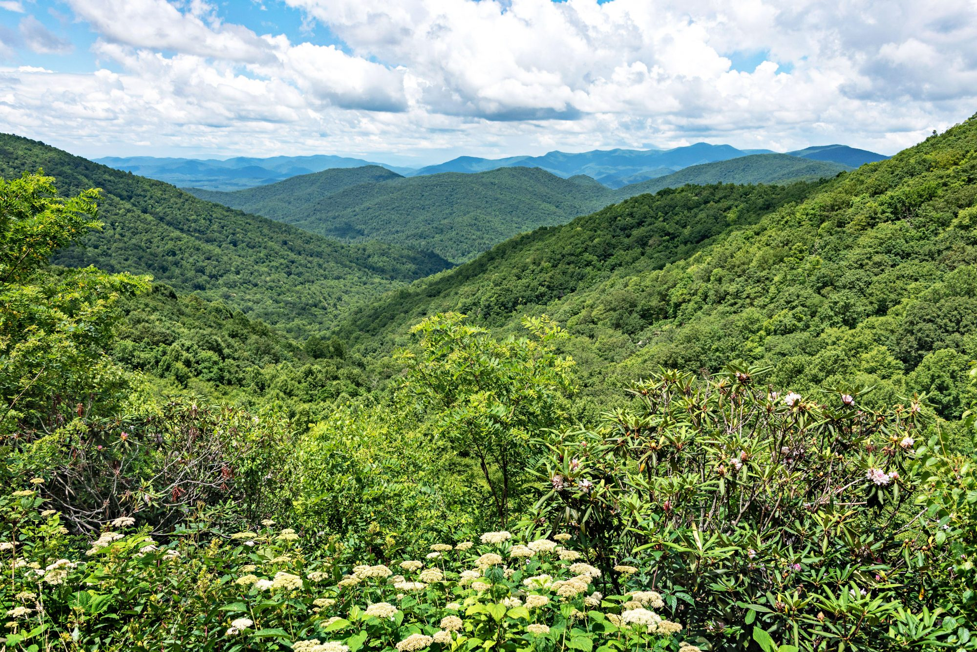 Chattahoochee-Oconee National Forests