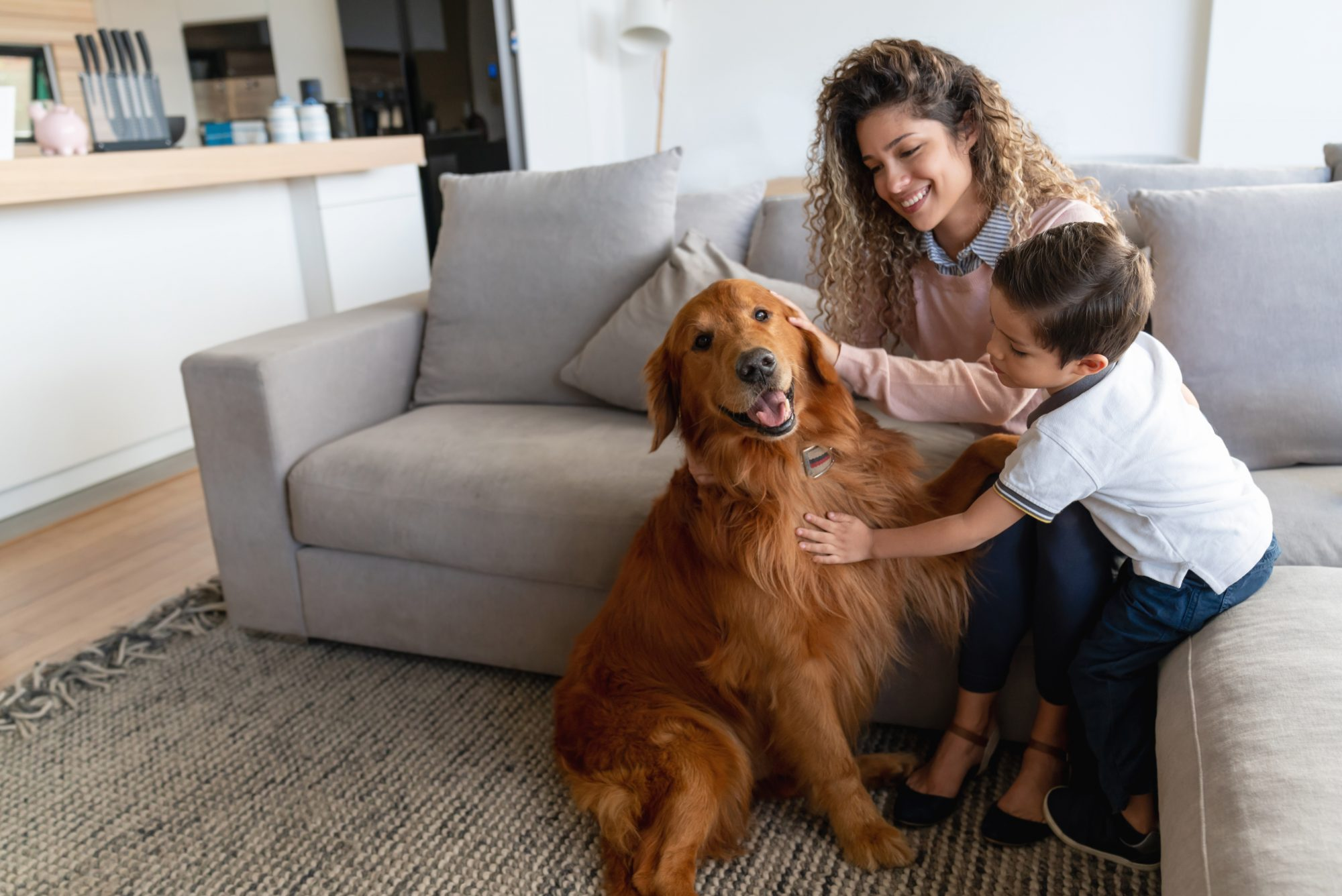 Golden Retriever with mother and son
