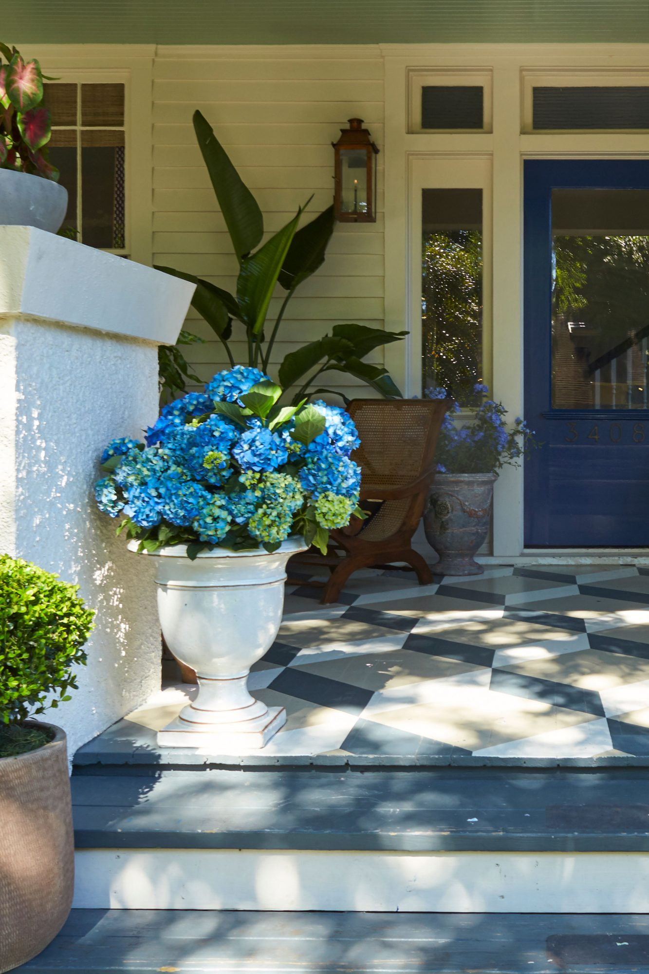 Front Porch Blue Hydrangea in White Container
