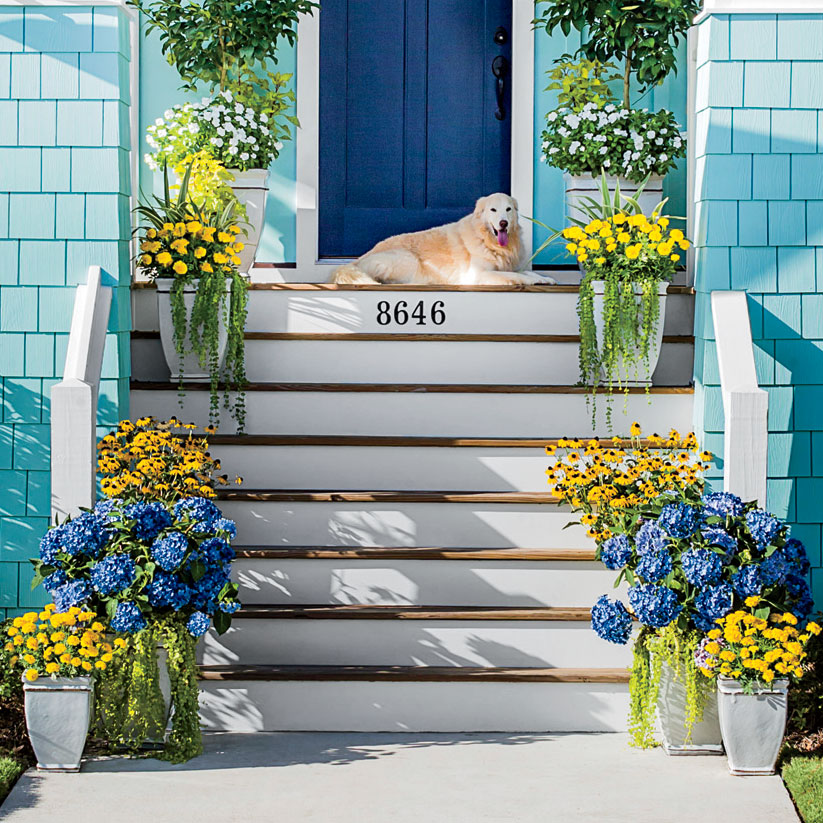 Blue and Yellow Container Garden