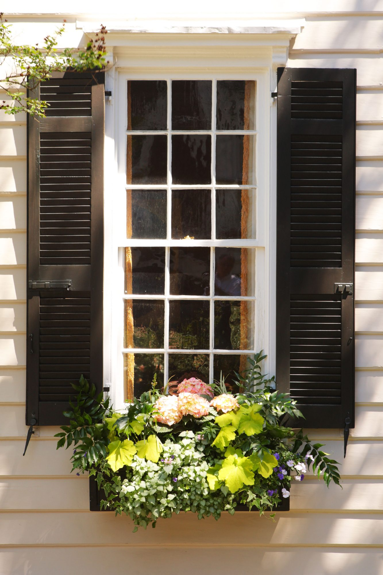 Windows with Black Shutters and Hydrangea and Ivy Window boxes