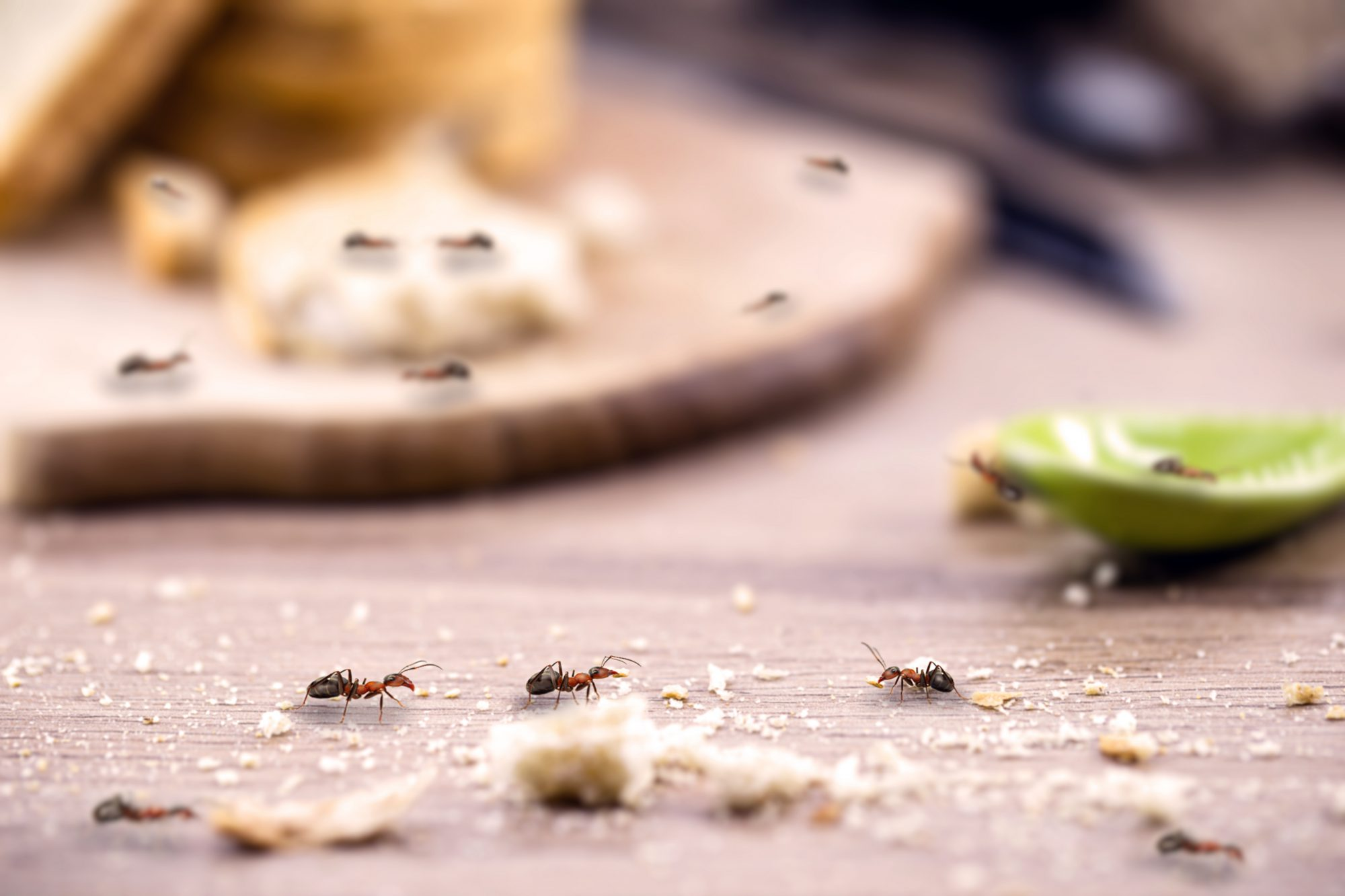 Ants in the Kitchen